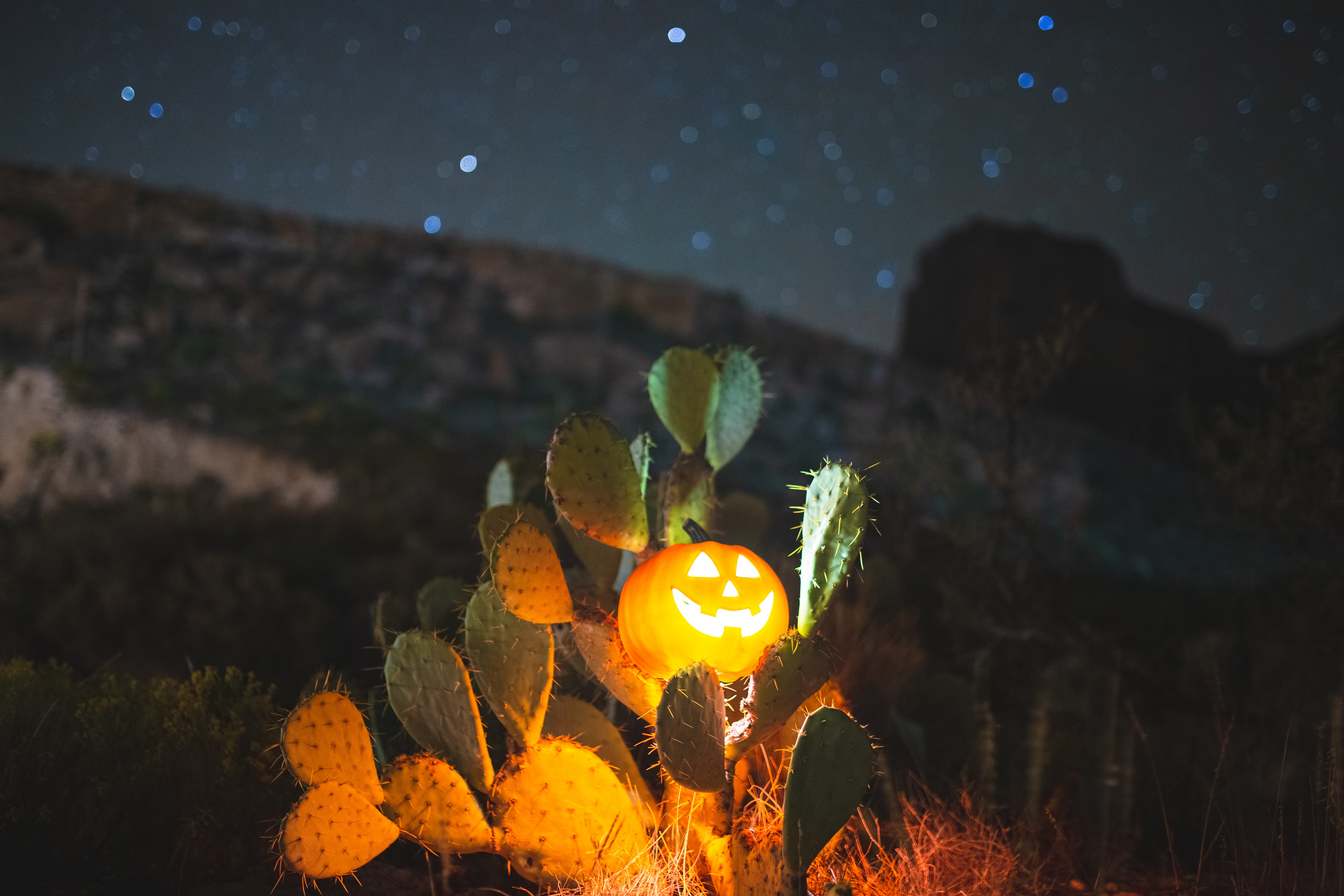 147825 download wallpaper Cactuses, Halloween, Night, Pumpkin, Miscellanea, Miscellaneous, Glow screensavers and pictures for free