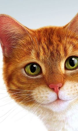 7282 download wallpaper Animals, Cats, Pictures screensavers and pictures for free