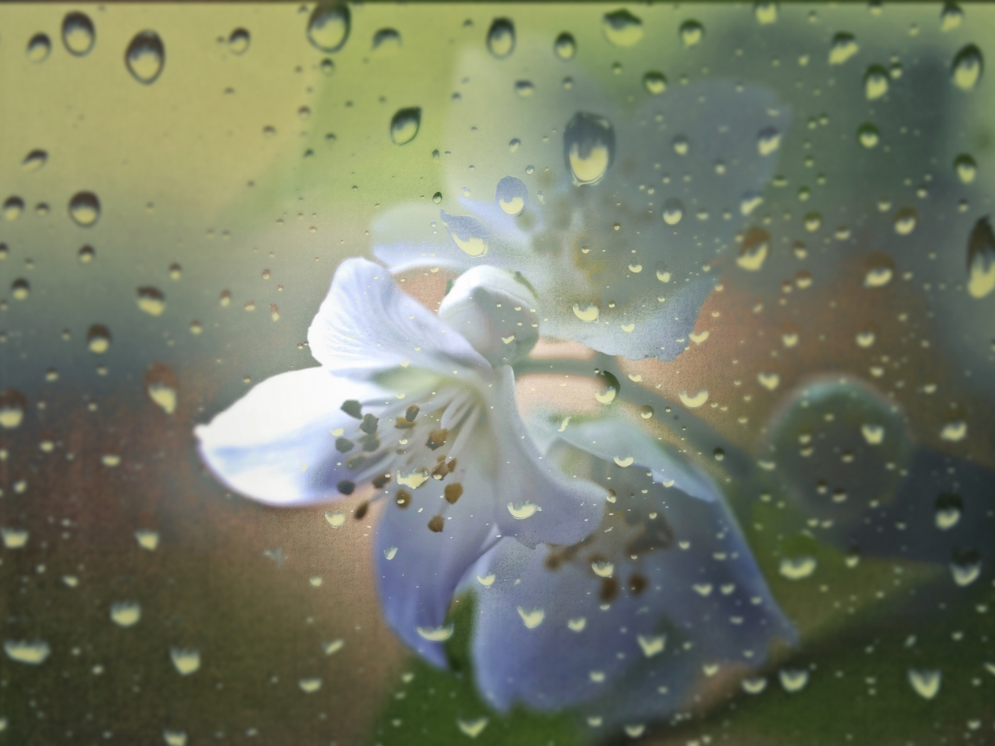 27819 download wallpaper Flowers, Background, Drops screensavers and pictures for free