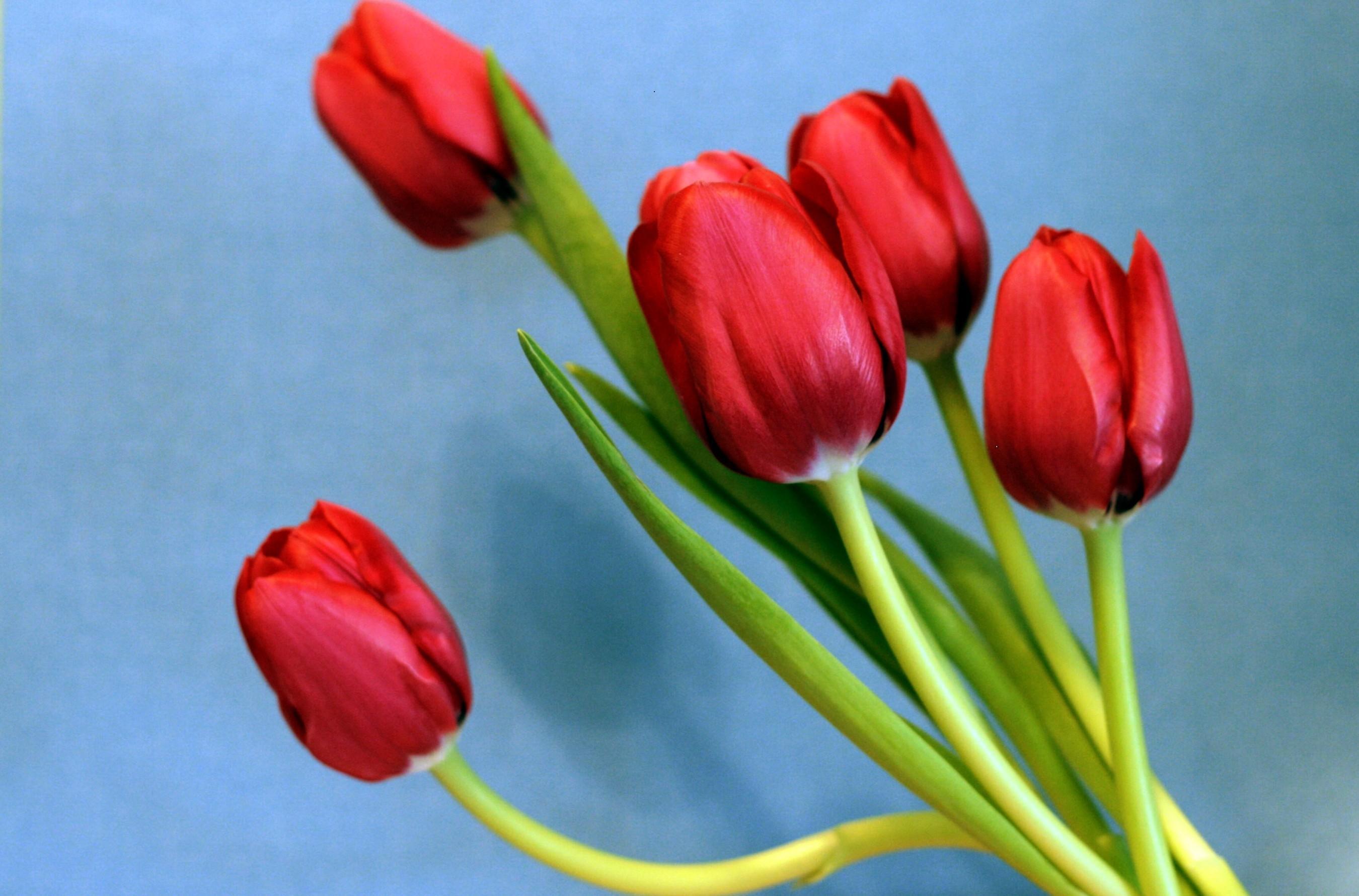 120357 descargar fondo de pantalla Flores, Primavera, Ramo, Fondo, Tulipanes: protectores de pantalla e imágenes gratis