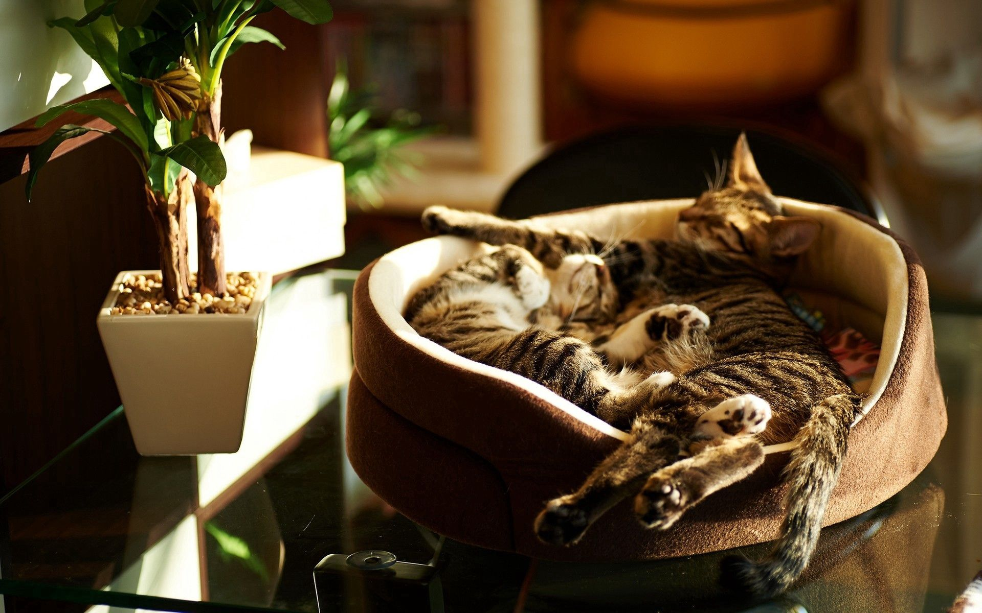 95331 Screensavers and Wallpapers Kittens for phone. Download Animals, Cats, Couple, Pair, To Lie Down, Lie, Sleep, Dream, Kittens pictures for free