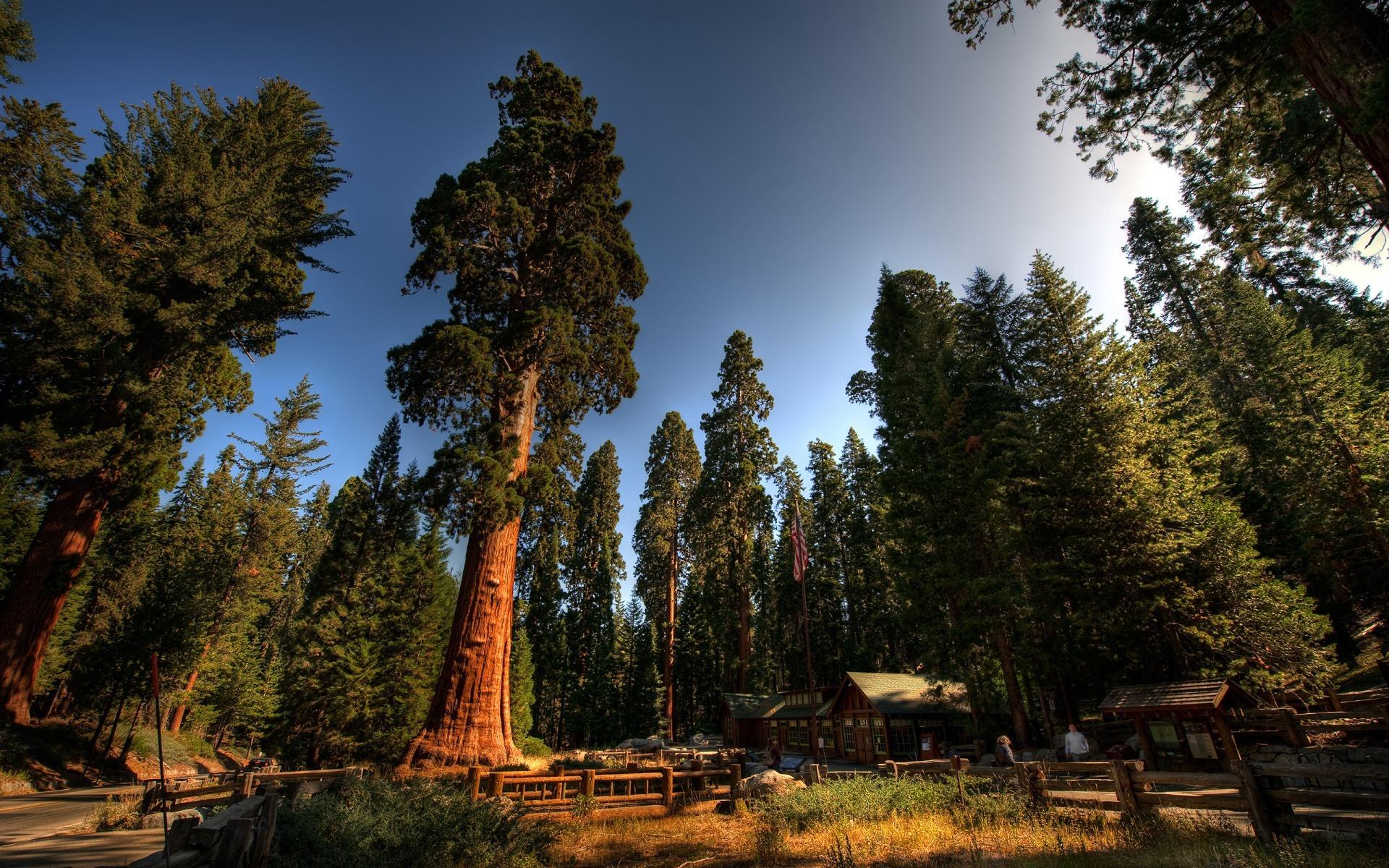8443 скачать обои Пейзаж, Деревья - заставки и картинки бесплатно