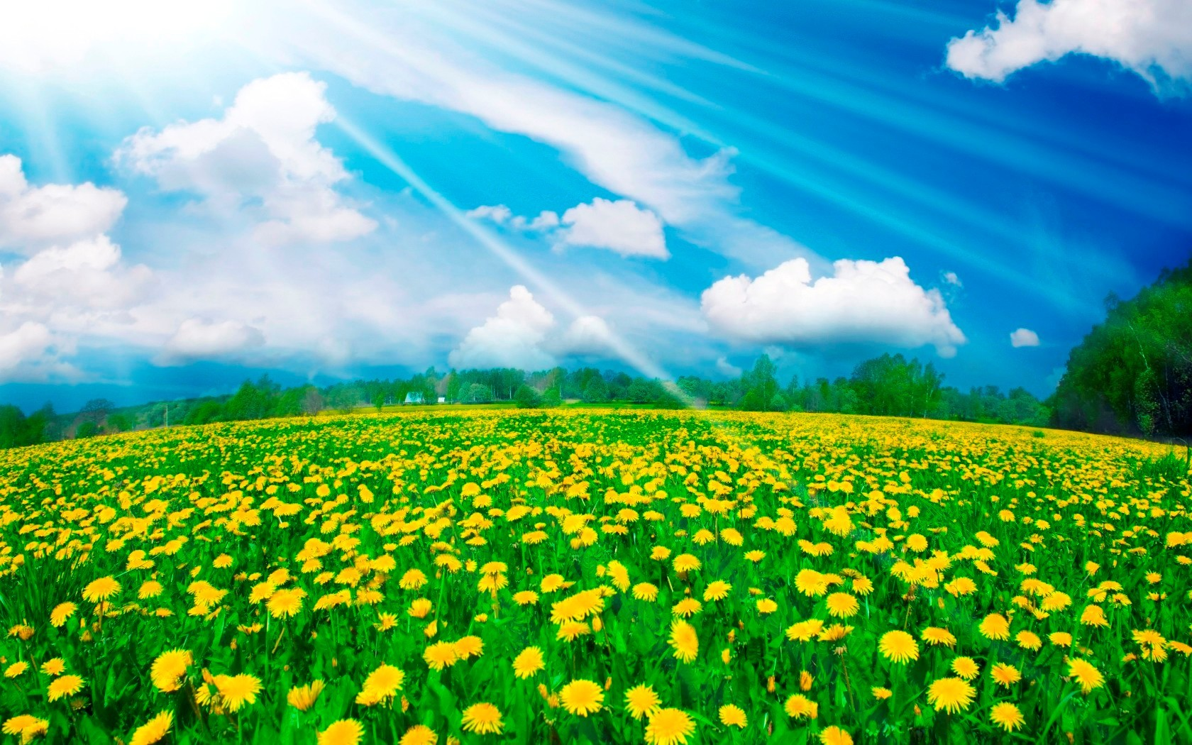 48524 download wallpaper Plants, Nature, Landscape, Fields screensavers and pictures for free