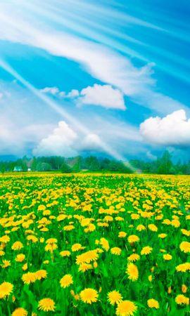 48524 завантажити шпалери Рослини, Пейзаж, Природа, Поля - заставки і картинки безкоштовно