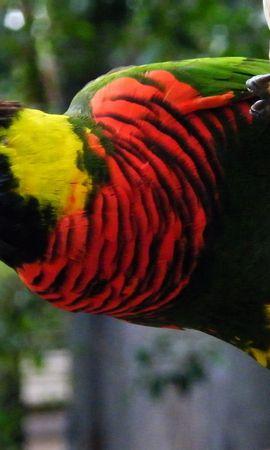 27725 baixar papel de parede Animais, Aves, Papagaios - protetores de tela e imagens gratuitamente