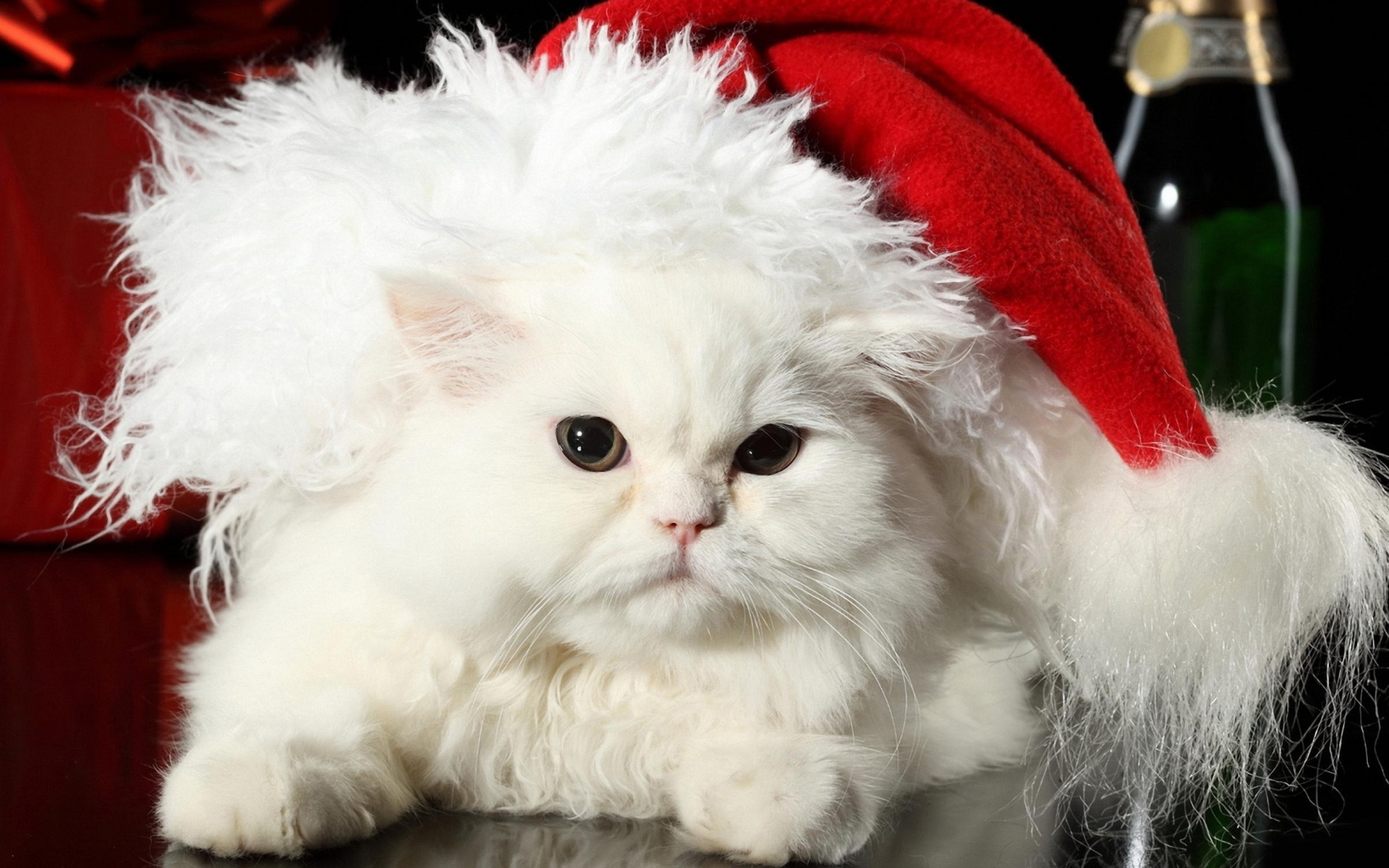 27999 Заставки и Обои Новый Год (New Year) на телефон. Скачать Новый Год (New Year), Праздники, Животные, Кошки (Коты, Котики) картинки бесплатно