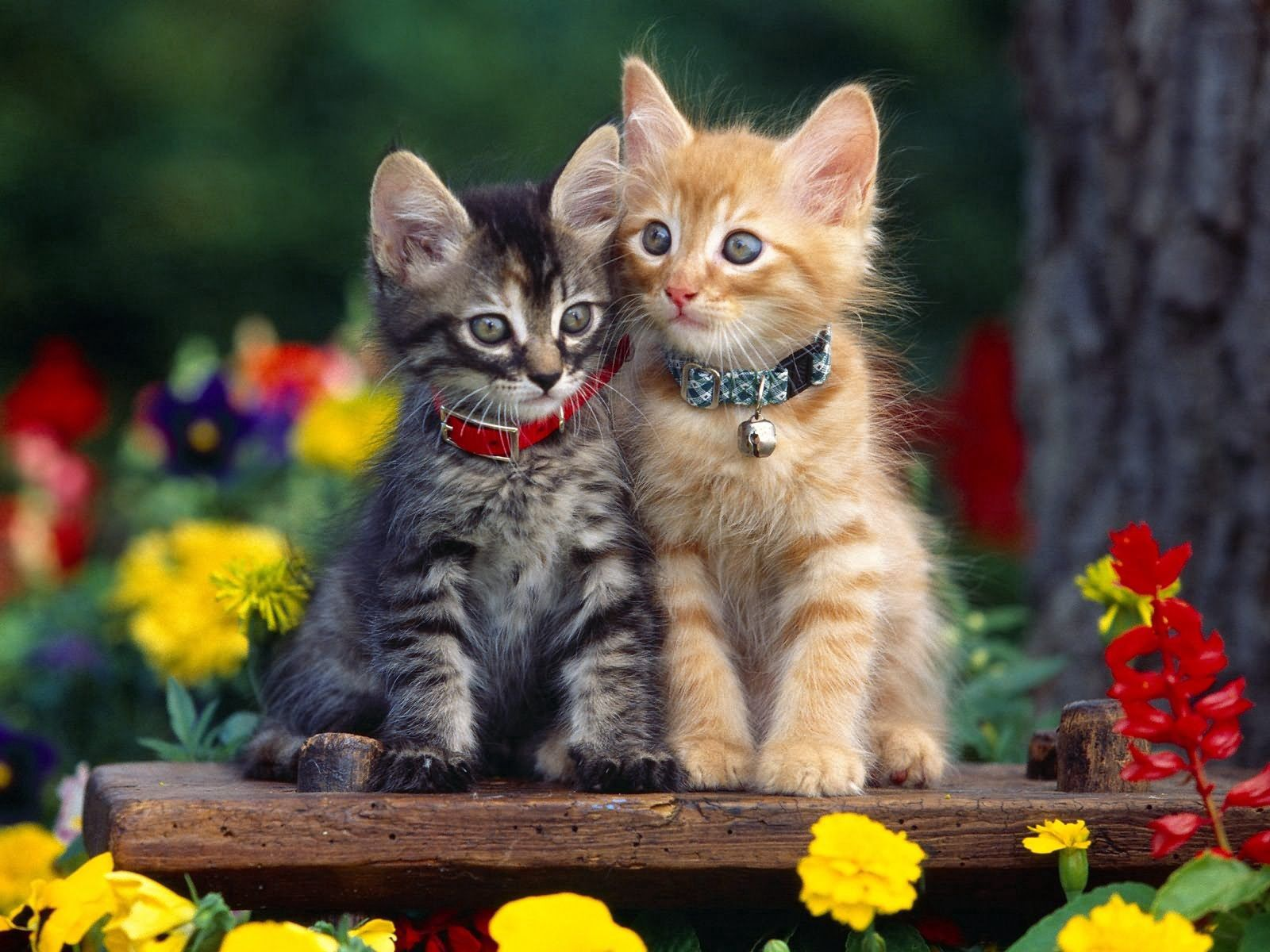 118084 Screensavers and Wallpapers Kittens for phone. Download Animals, Flowers, Couple, Pair, Collar, Kittens pictures for free
