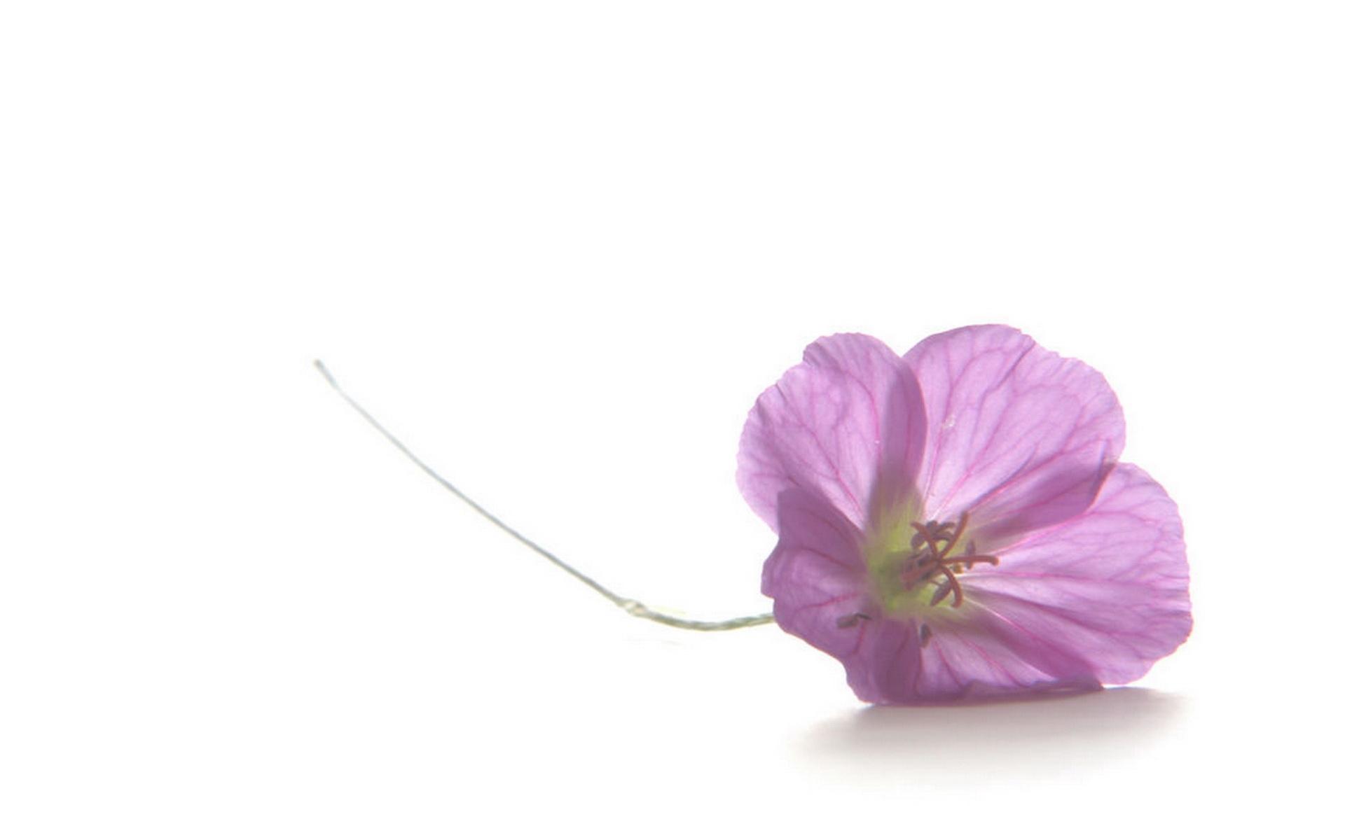 7551 скачать обои Растения, Цветы, Фон - заставки и картинки бесплатно