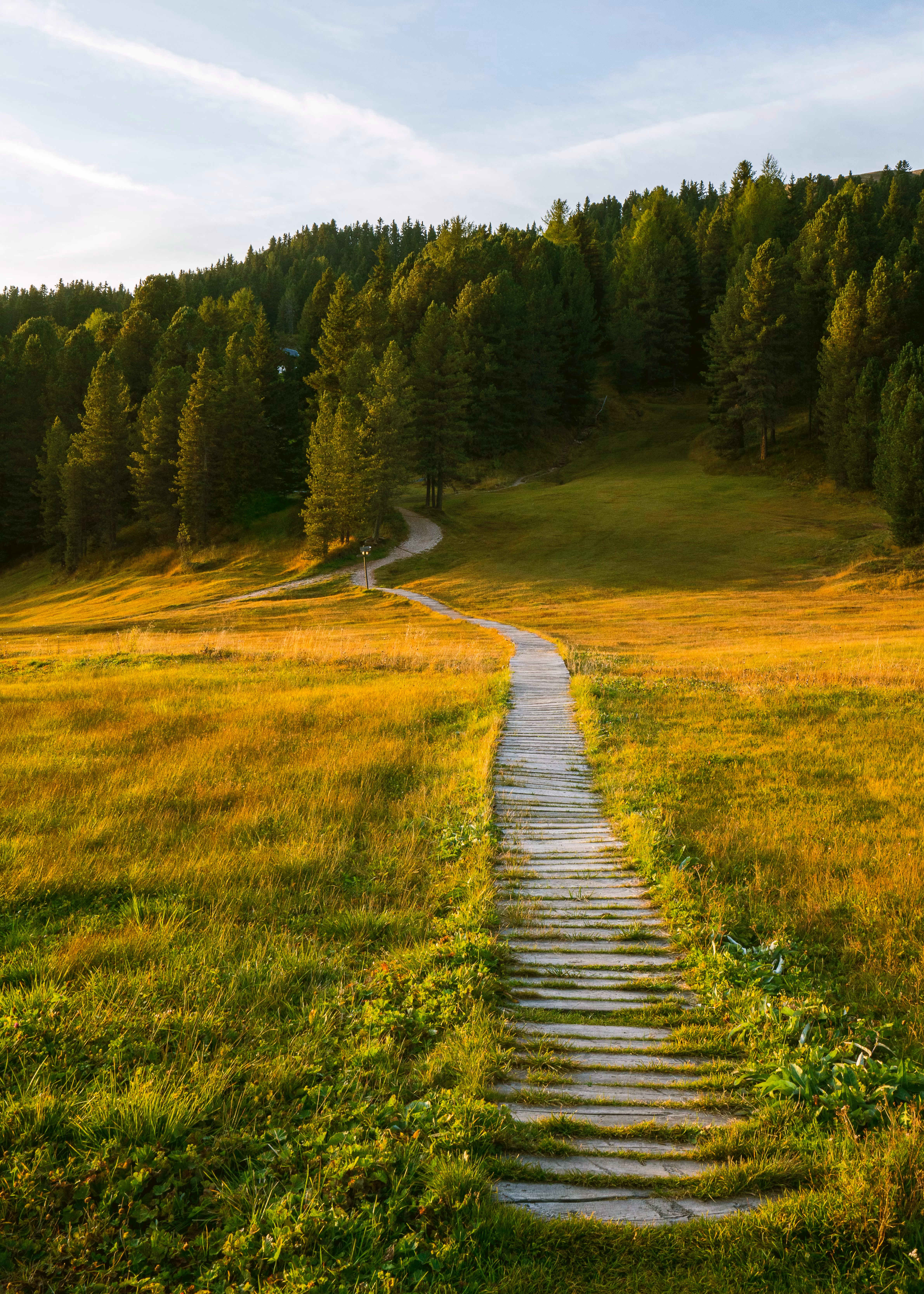 85121 download wallpaper Path, Field, Forest, Nature, Landscape screensavers and pictures for free