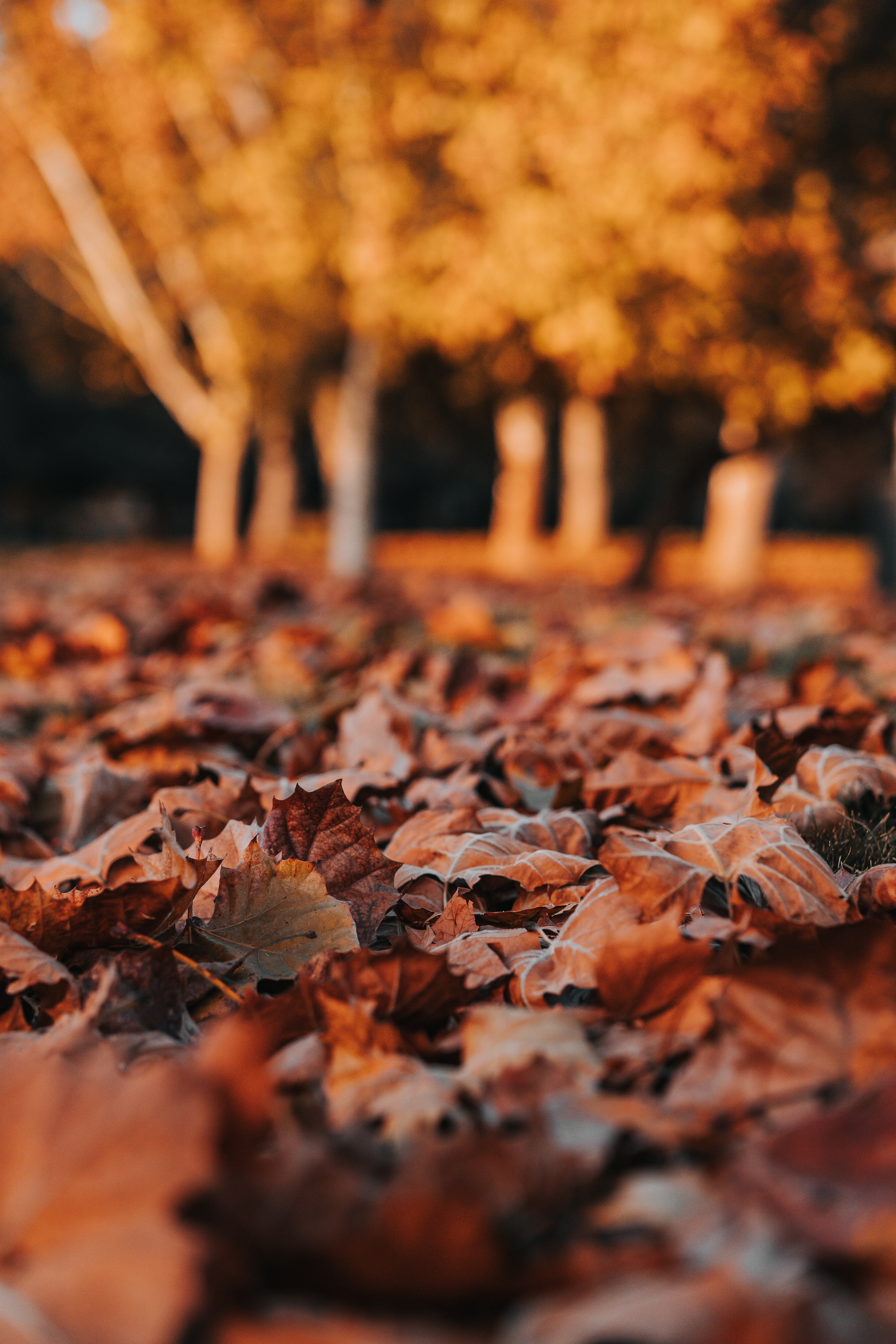 147126 download wallpaper Leaves, Dry, Autumn, Nature screensavers and pictures for free