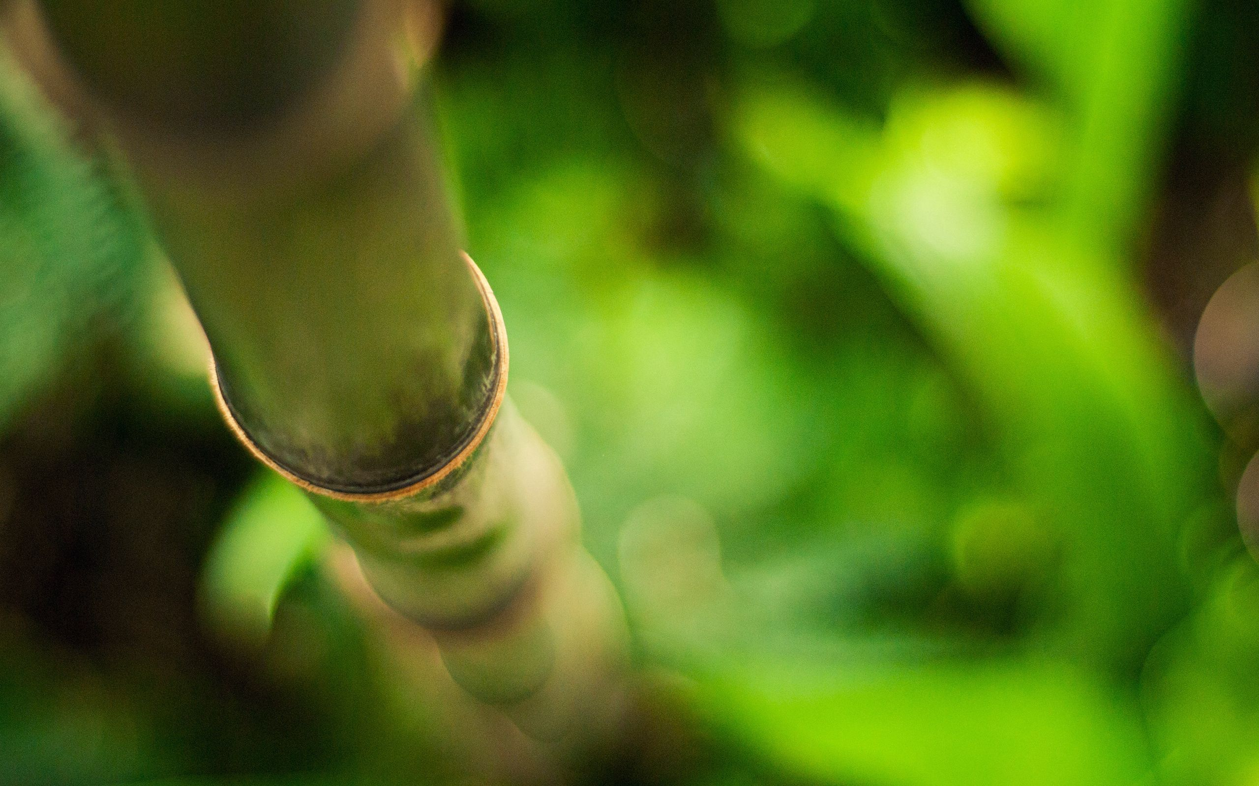 80936 download wallpaper Macro, Stem, Stalk, Bamboo, Branch, Glare screensavers and pictures for free