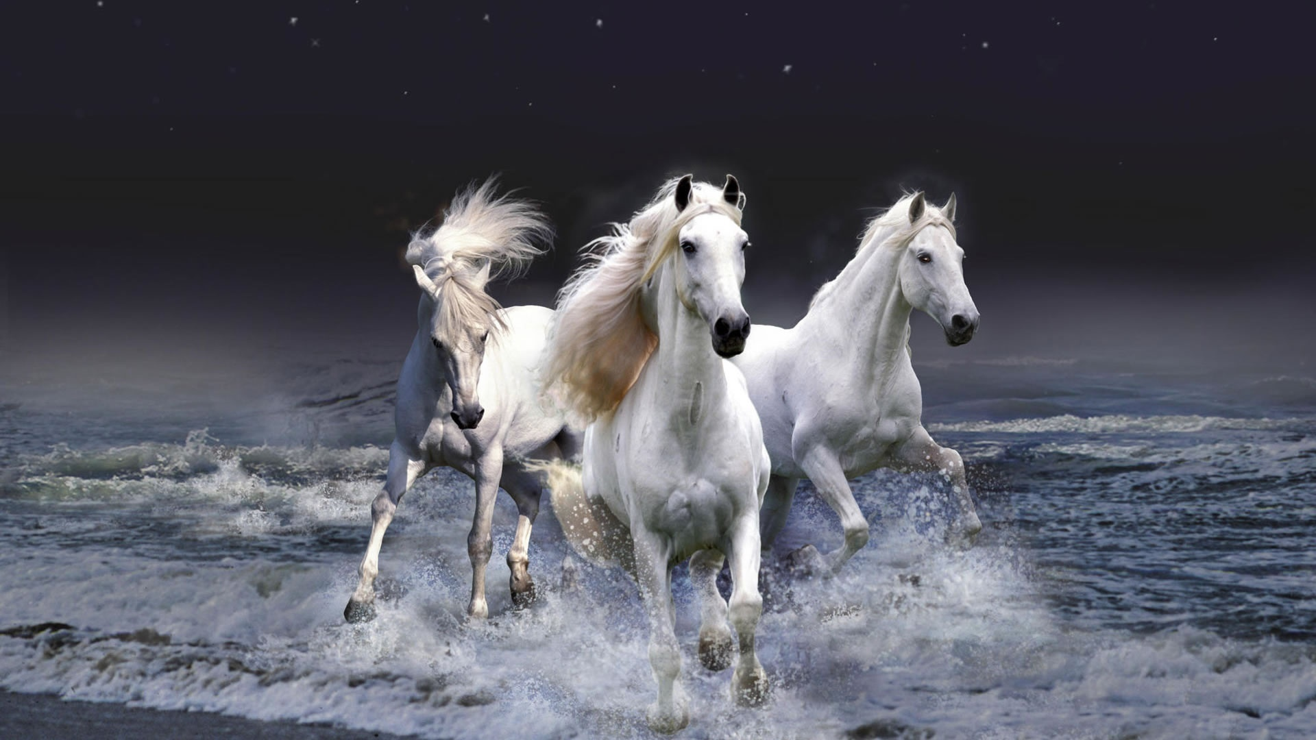 25072 download wallpaper Animals, Horses, Sea, Waves screensavers and pictures for free
