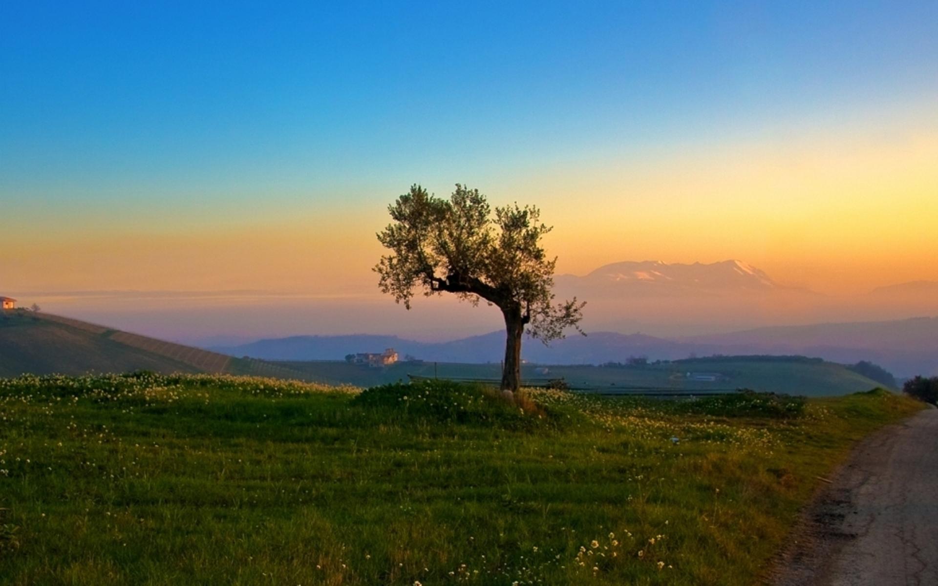 25922 скачать обои Пейзаж, Деревья, Закат, Поля - заставки и картинки бесплатно