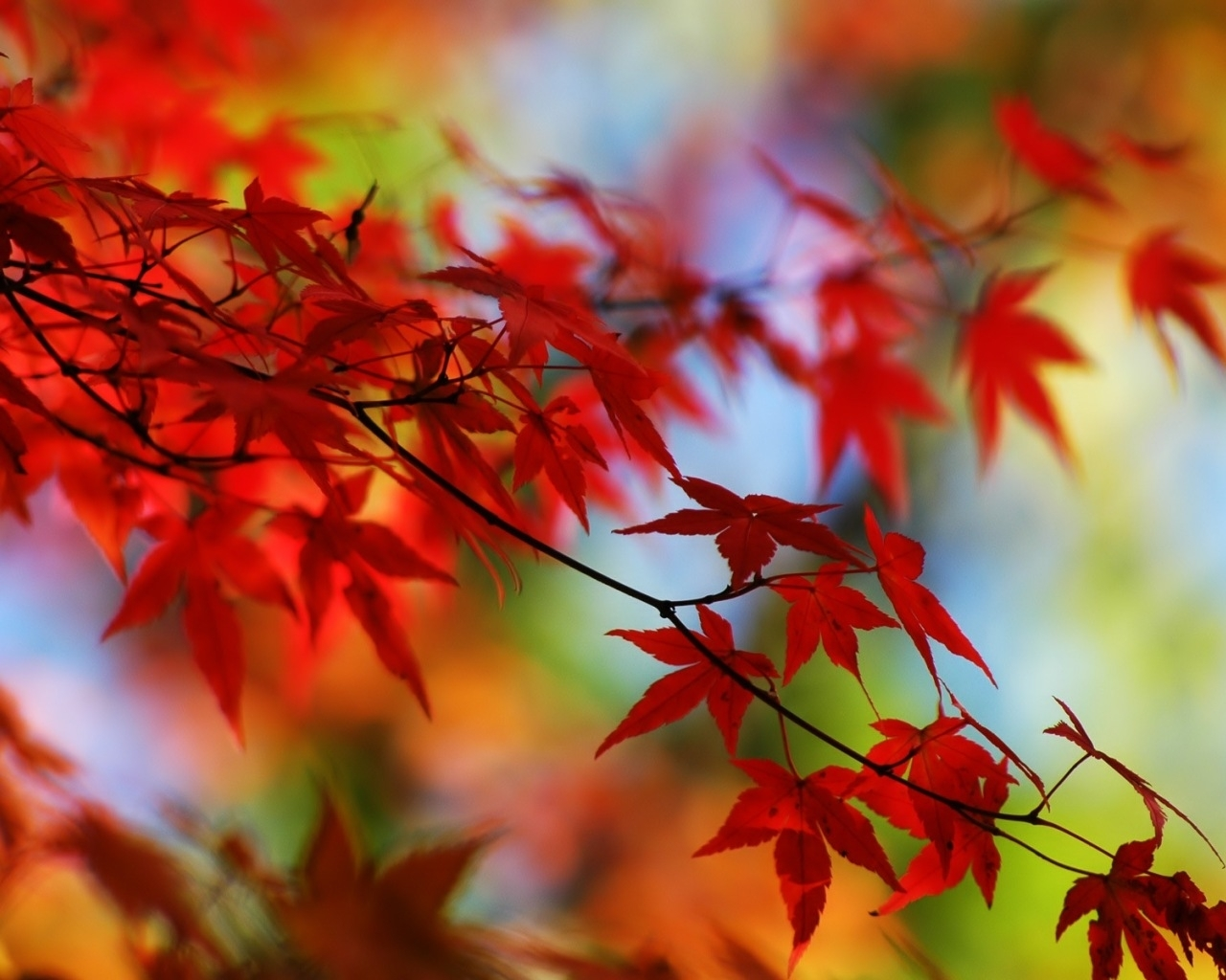 1731 скачать обои Растения, Осень, Листья - заставки и картинки бесплатно