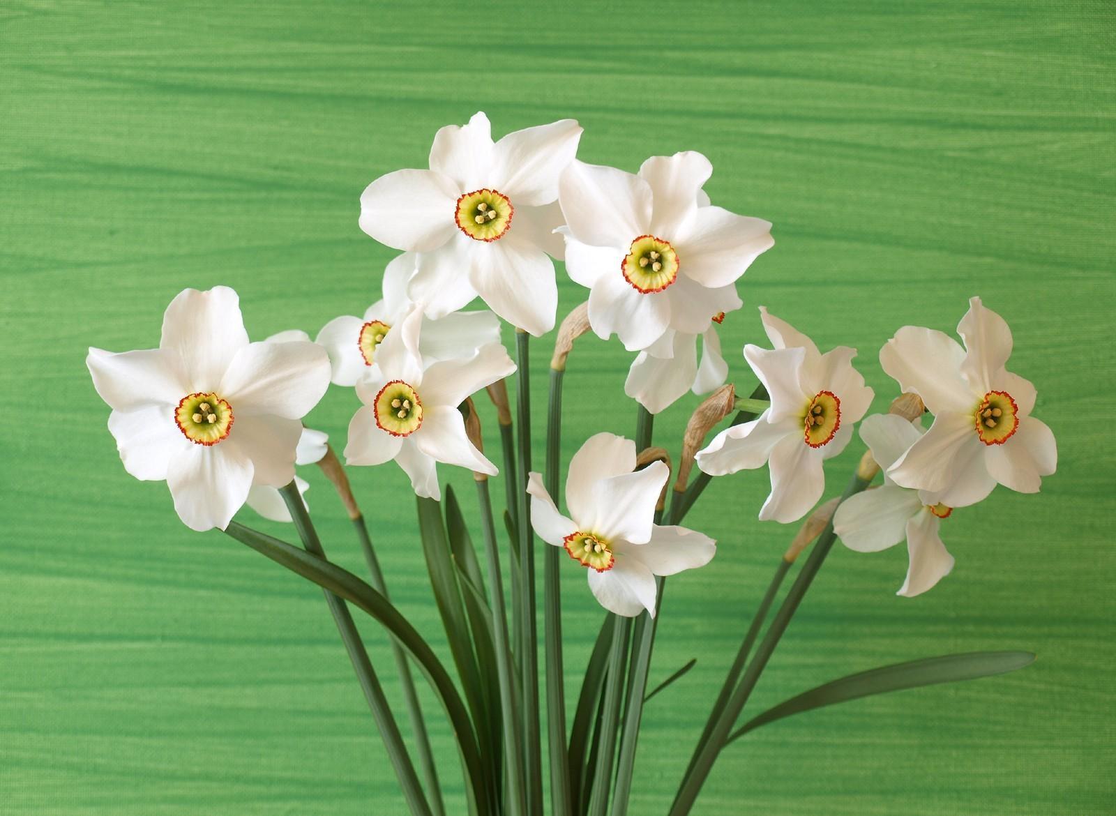 137026 Заставки и Обои Нарциссы на телефон. Скачать Цветы, Фон, Нарциссы, Букет, Весна картинки бесплатно