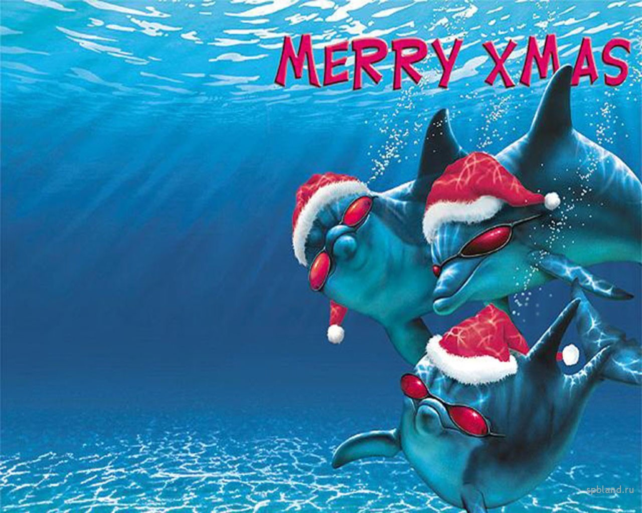 14084 download wallpaper Funny, Holidays, Dolfins, Sea, New Year, Christmas, Xmas, Fishes screensavers and pictures for free