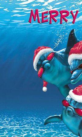 14084 baixar papel de parede Engraçado, Férias, Golfinhos, Mar, Ano Novo, Natal, Peixes - protetores de tela e imagens gratuitamente