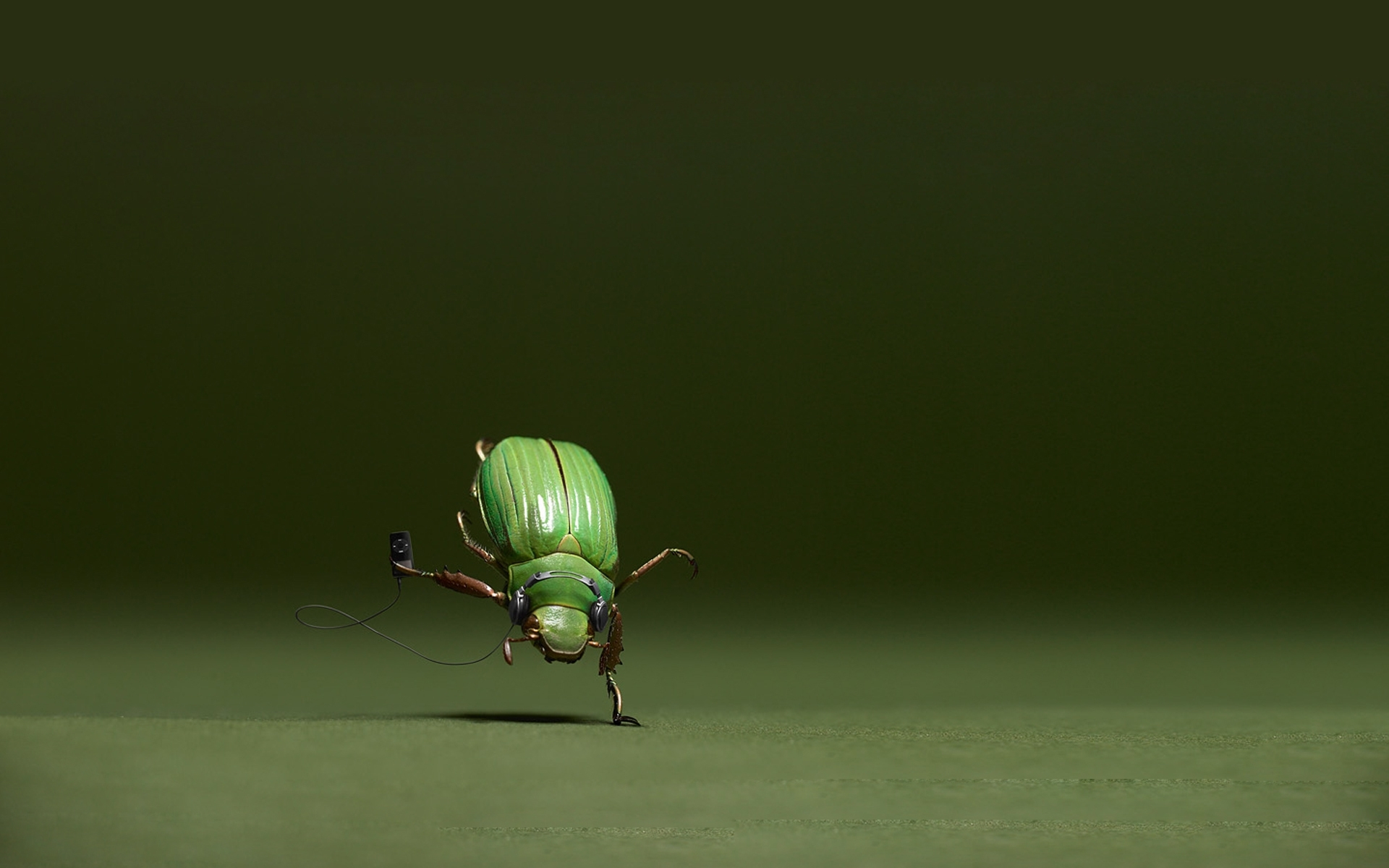 30871 Salvapantallas y fondos de pantalla Insectos en tu teléfono. Descarga imágenes de Divertido, Música, Insectos gratis