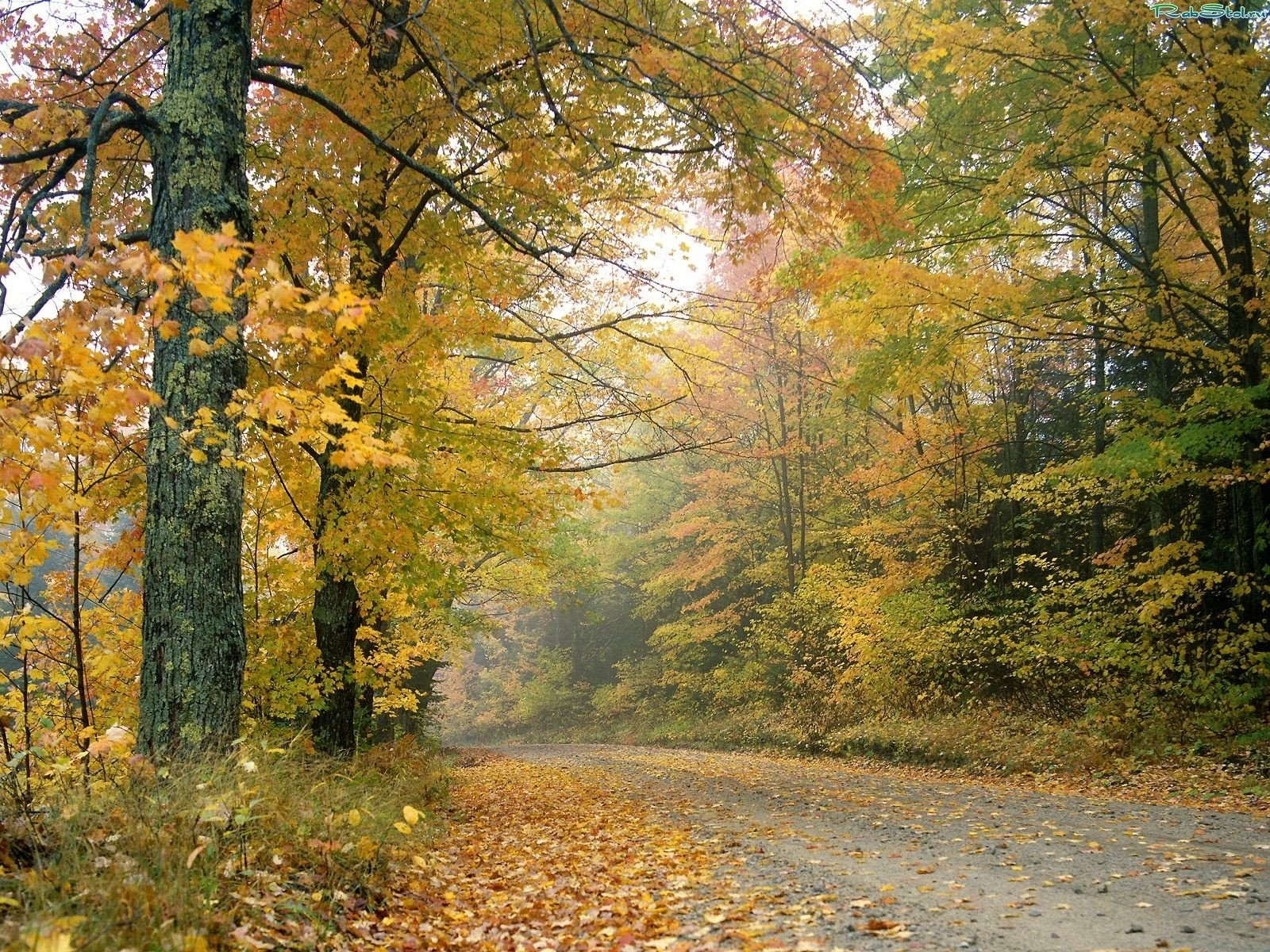 9710 download wallpaper Landscape, Trees, Leaves screensavers and pictures for free