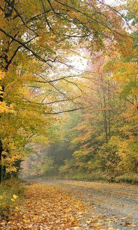 9710 скачать обои Пейзаж, Деревья, Листья - заставки и картинки бесплатно