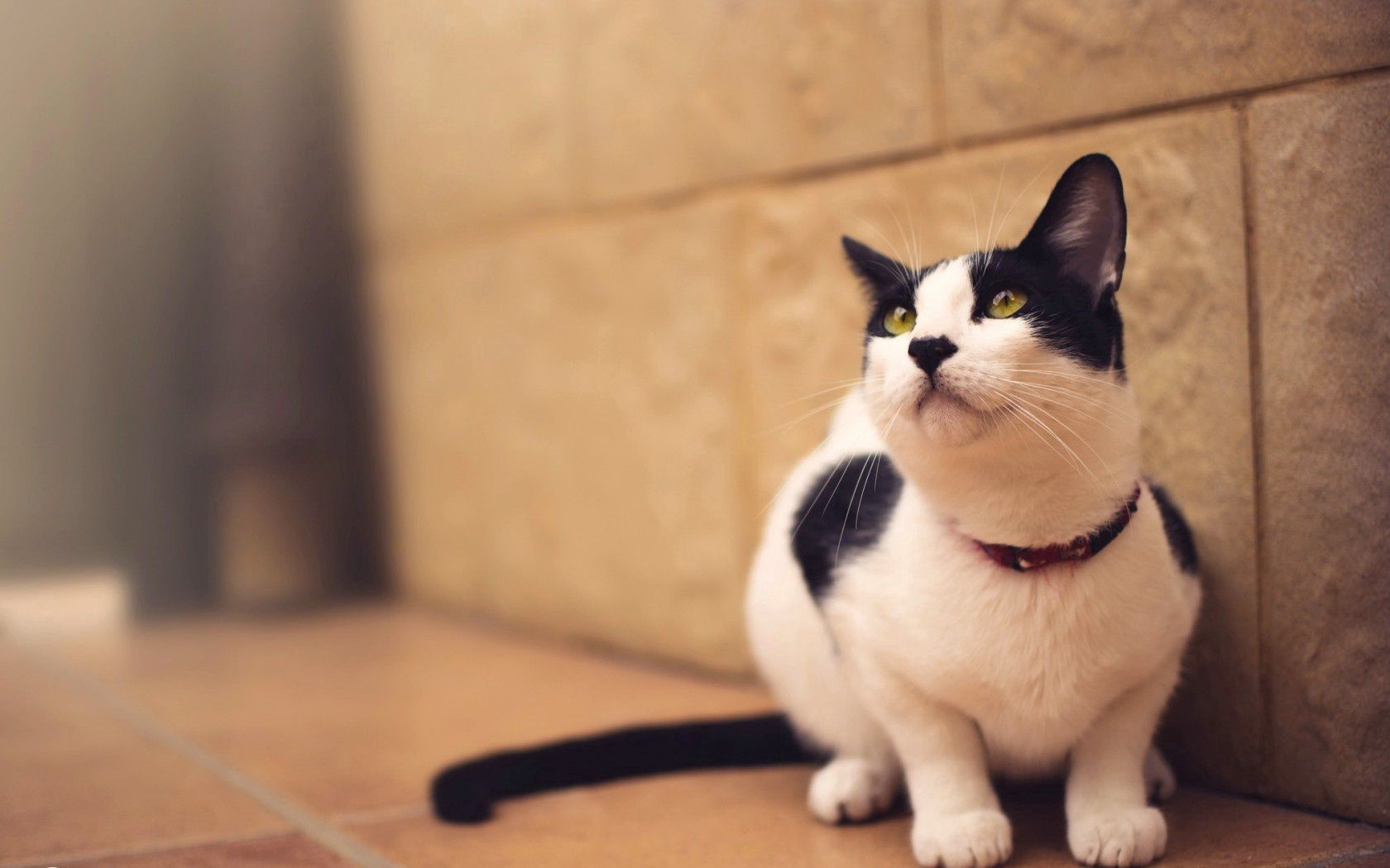 93607 download wallpaper Animals, Cat, Spotted, Spotty, Blur, Smooth screensavers and pictures for free