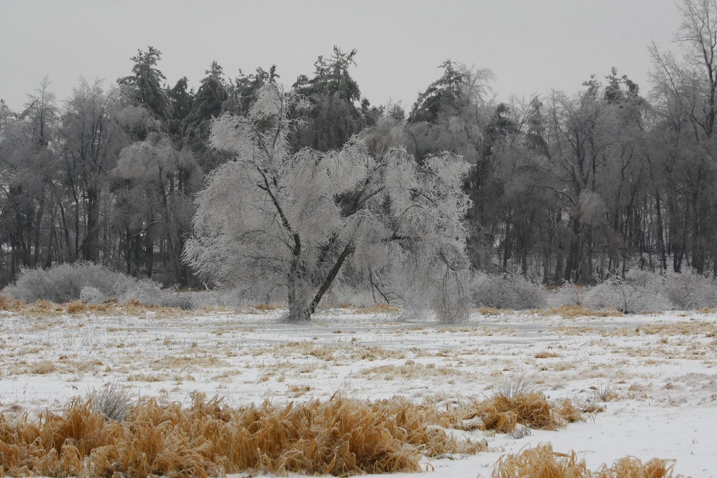 1141 download wallpaper Landscape, Winter, Trees, Snow screensavers and pictures for free