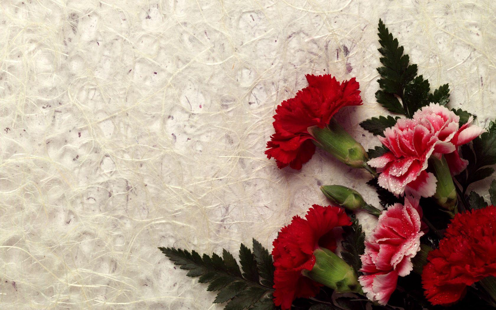 73953 Заставки и Обои Гвоздики на телефон. Скачать Цветы, Листья, Капли, Гвоздики, Букет, Свежесть картинки бесплатно
