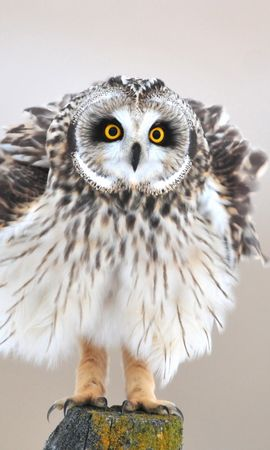 Free wallpaper 40295: Animals, Birds, Owl download pictures for cellphone