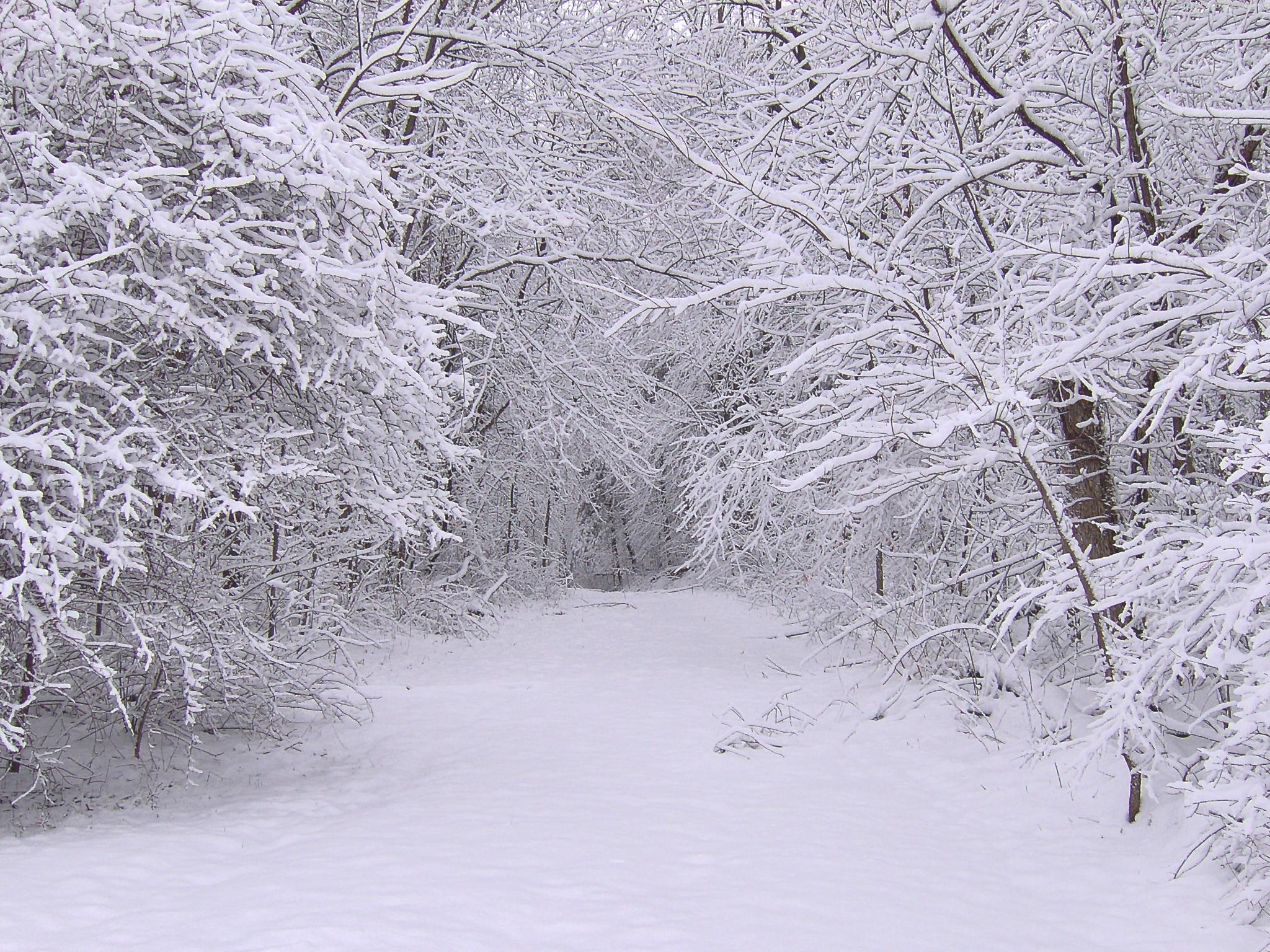 15191 descargar fondo de pantalla Paisaje, Invierno, Árboles, Carreteras, Nieve: protectores de pantalla e imágenes gratis