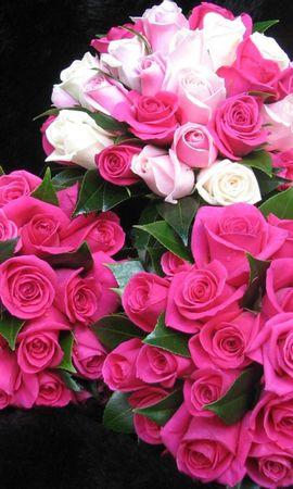 106652 télécharger le fond d'écran Fleurs, Trois, Drops, Fraîcheur, Inscription, Typographie, Beauté, Roses, Bouquets - économiseurs d'écran et images gratuitement