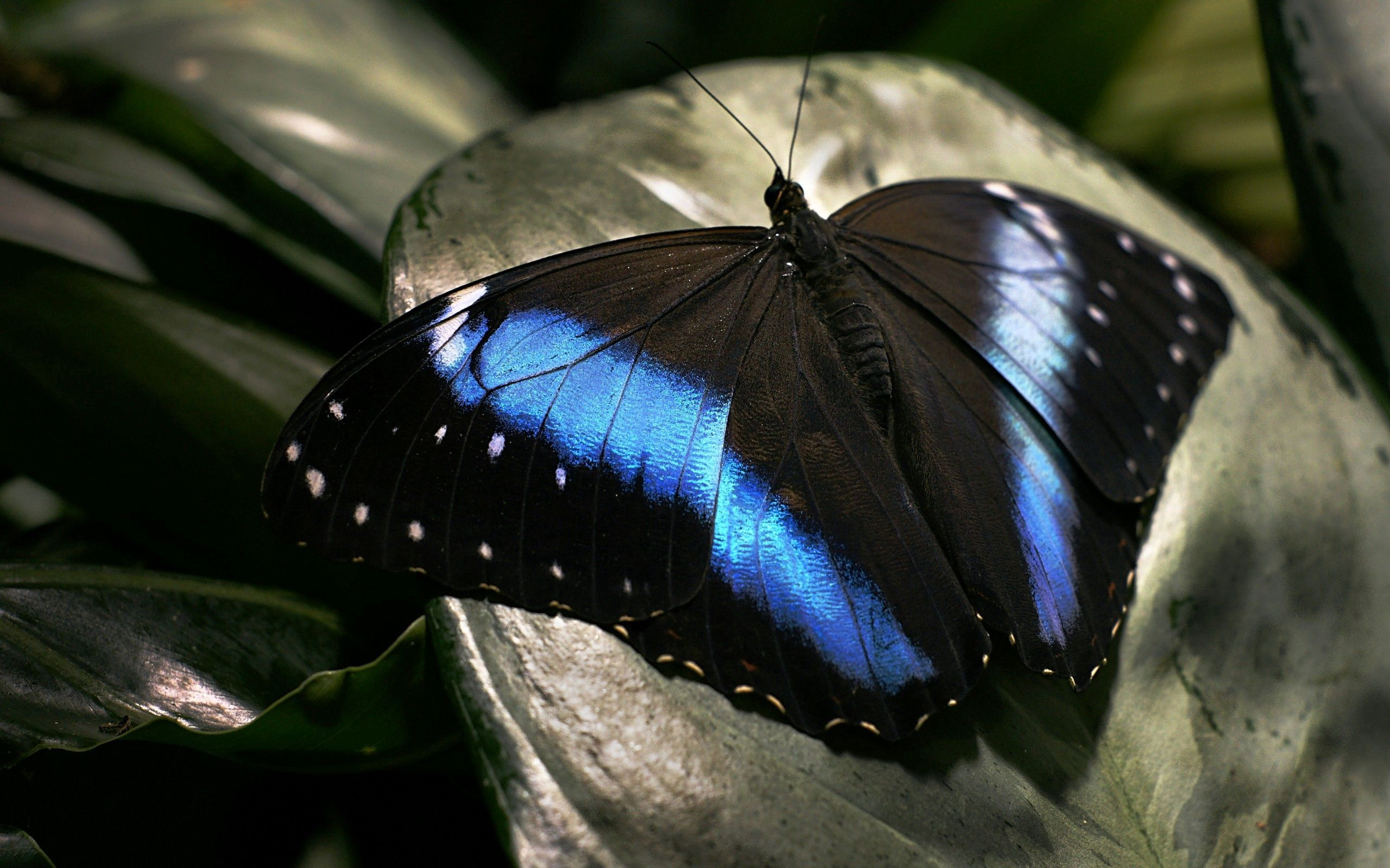 69465 Screensavers and Wallpapers Butterfly for phone. Download Macro, Dark, Surface, Butterfly, Wings pictures for free