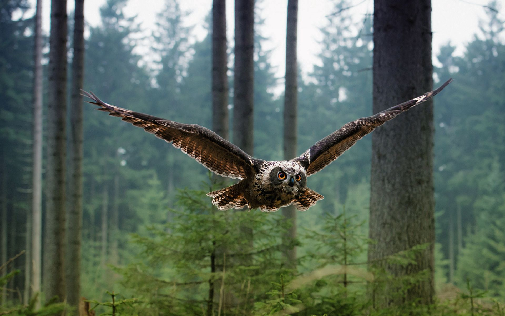 90083 download wallpaper Animals, Owl, Bird, Flight, Predator, Forest, Trees screensavers and pictures for free