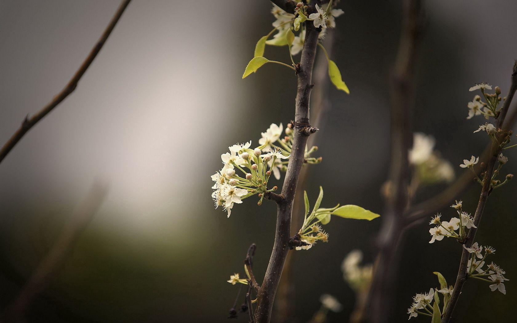59834 скачать обои Макро, Растение, Ветка, Листья, Темный - заставки и картинки бесплатно