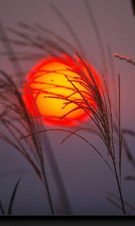 24496 descargar fondo de pantalla Plantas, Paisaje, Puesta Del Sol, Sol: protectores de pantalla e imágenes gratis