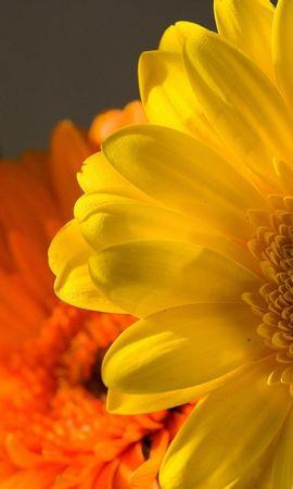 13959 скачать обои Растения, Цветы - заставки и картинки бесплатно
