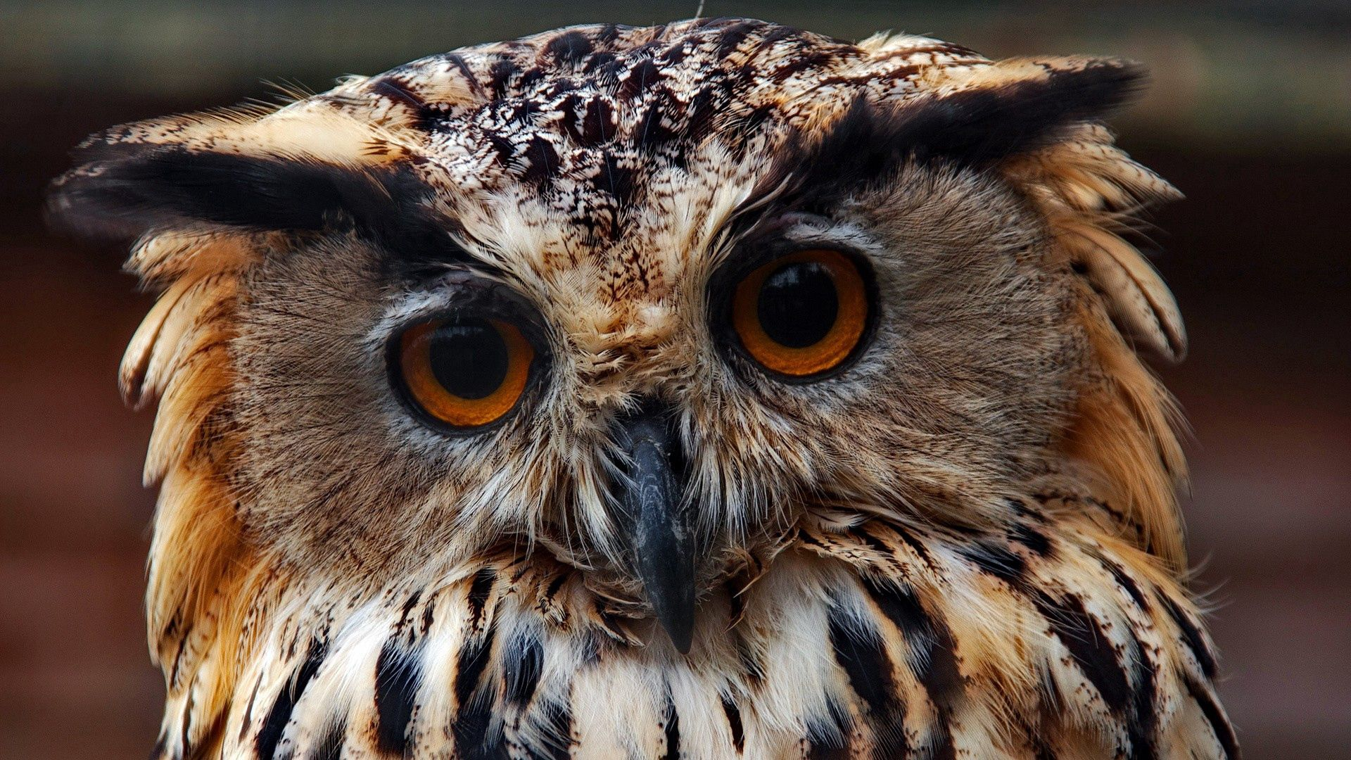 139521 Screensavers and Wallpapers Owl for phone. Download Animals, Owl, Muzzle, Close-Up, Predator pictures for free