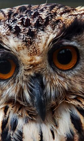 139521 download wallpaper Animals, Owl, Muzzle, Close-Up, Predator screensavers and pictures for free