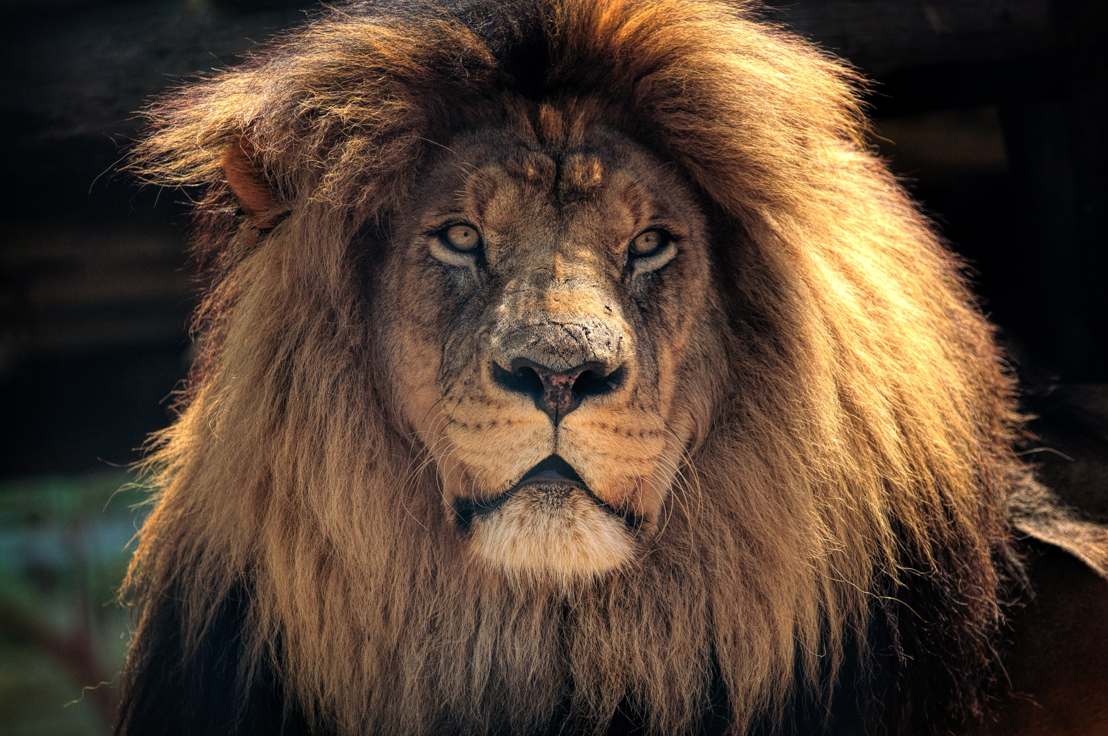 96812 Screensavers and Wallpapers Lion for phone. Download Animals, Muzzle, Lion, Predator, Mane pictures for free