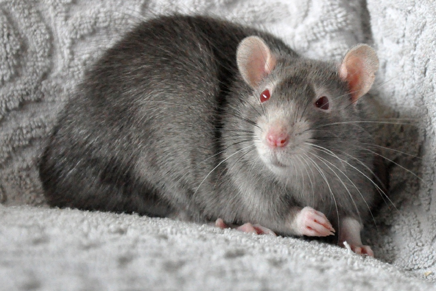 25754 Screensavers and Wallpapers Rodents for phone. Download Animals, Rodents pictures for free