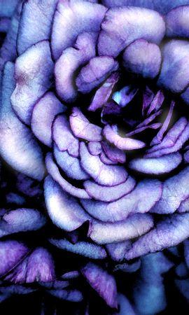 10039 скачать обои Растения, Цветы, Розы, Рисунки - заставки и картинки бесплатно