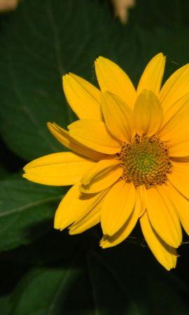 26381 скачать обои Растения, Цветы - заставки и картинки бесплатно