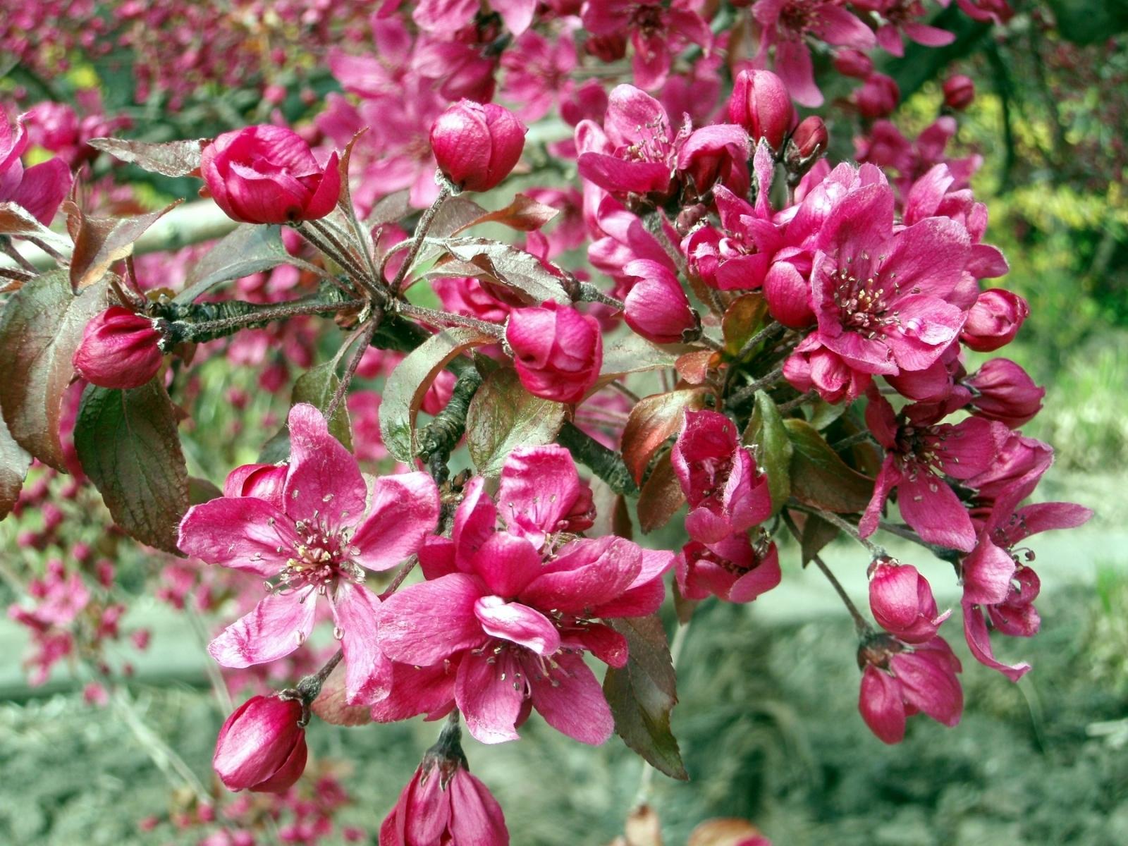 4549 скачать обои Растения, Цветы - заставки и картинки бесплатно