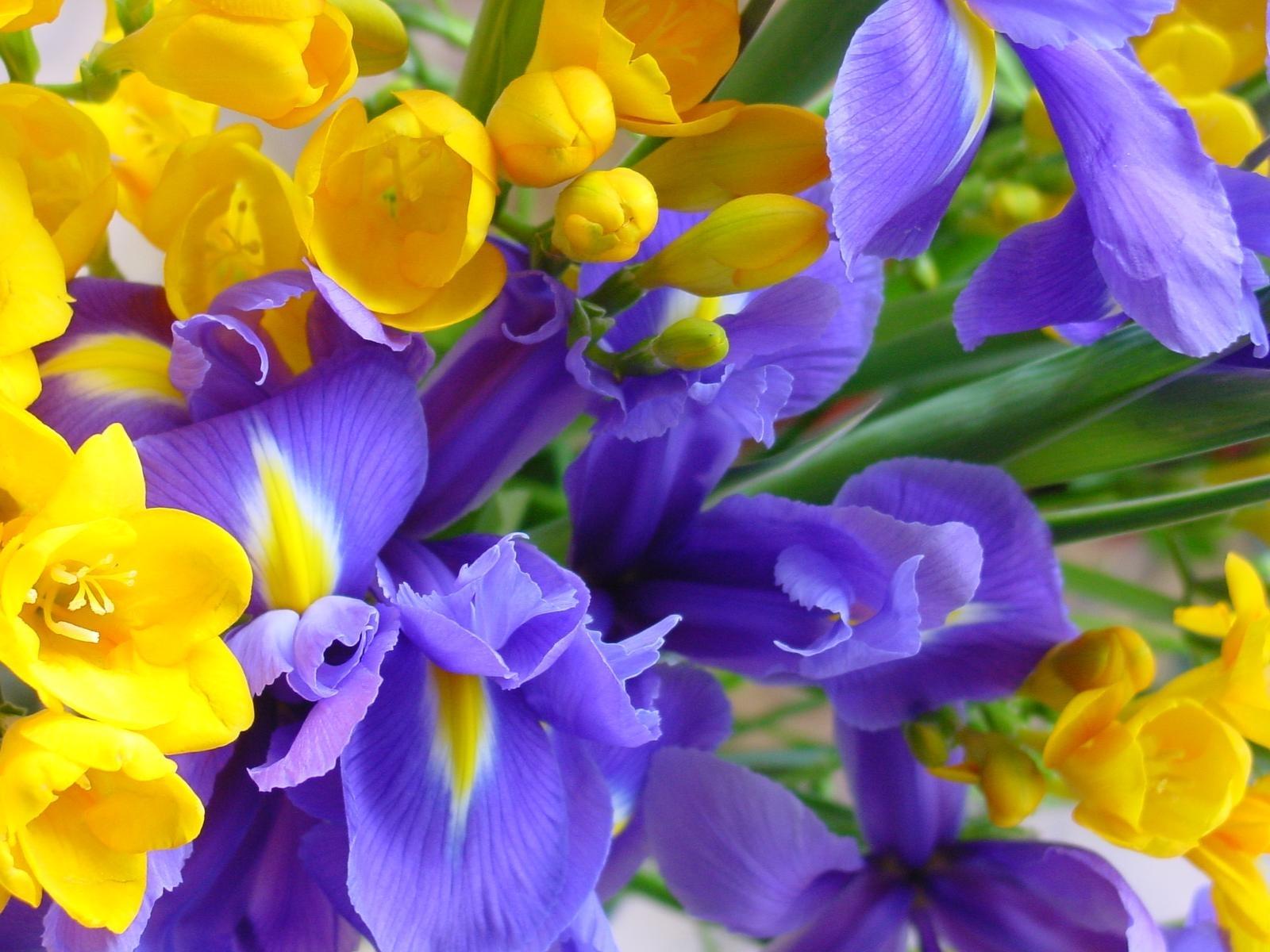 7741 скачать обои Растения, Цветы - заставки и картинки бесплатно