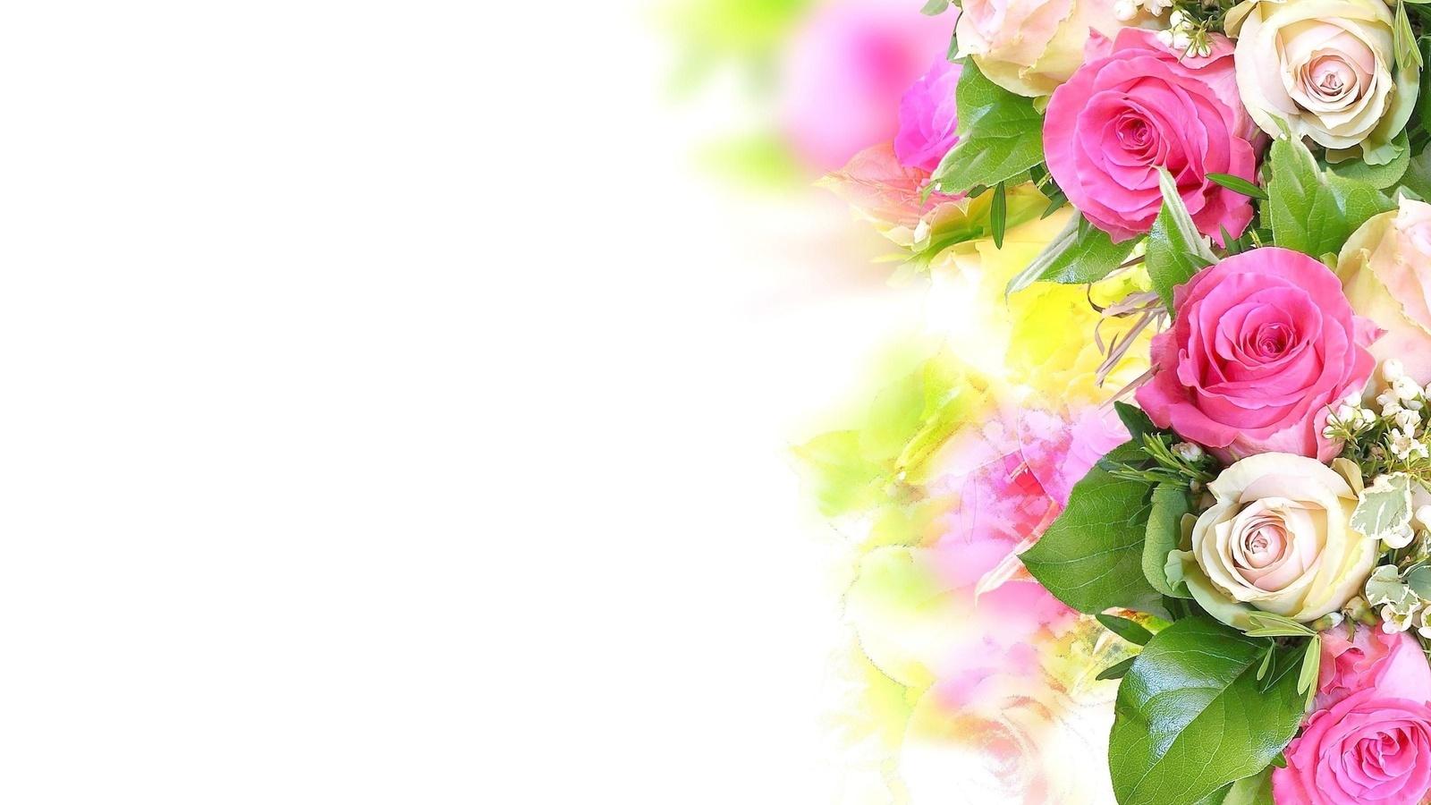 20940 télécharger le fond d'écran Plantes, Fleurs, Roses - économiseurs d'écran et images gratuitement