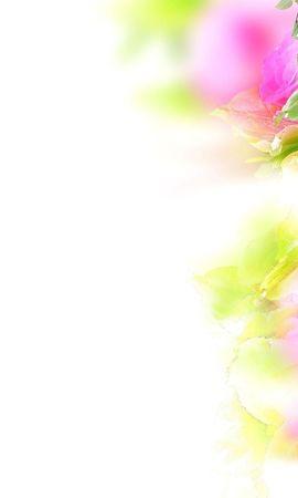 20940 baixar papel de parede Plantas, Flores, Rosas - protetores de tela e imagens gratuitamente
