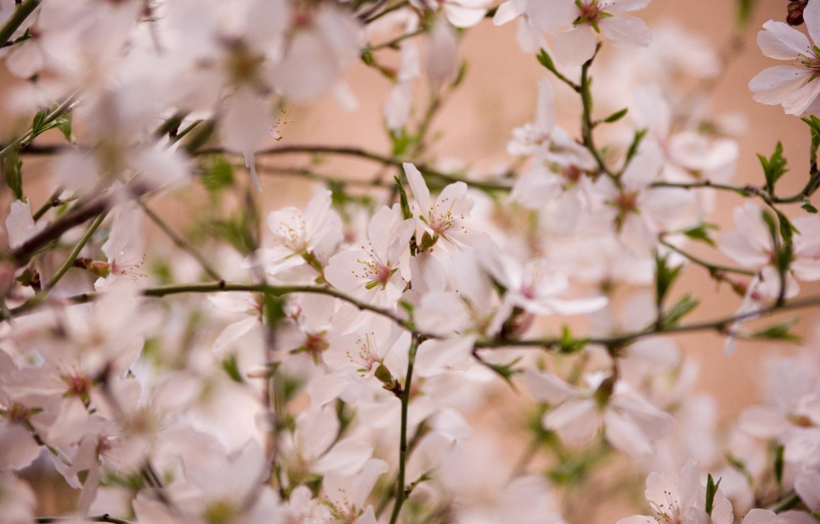 Скачать картинку Растения, Цветы, Фон в телефон бесплатно.