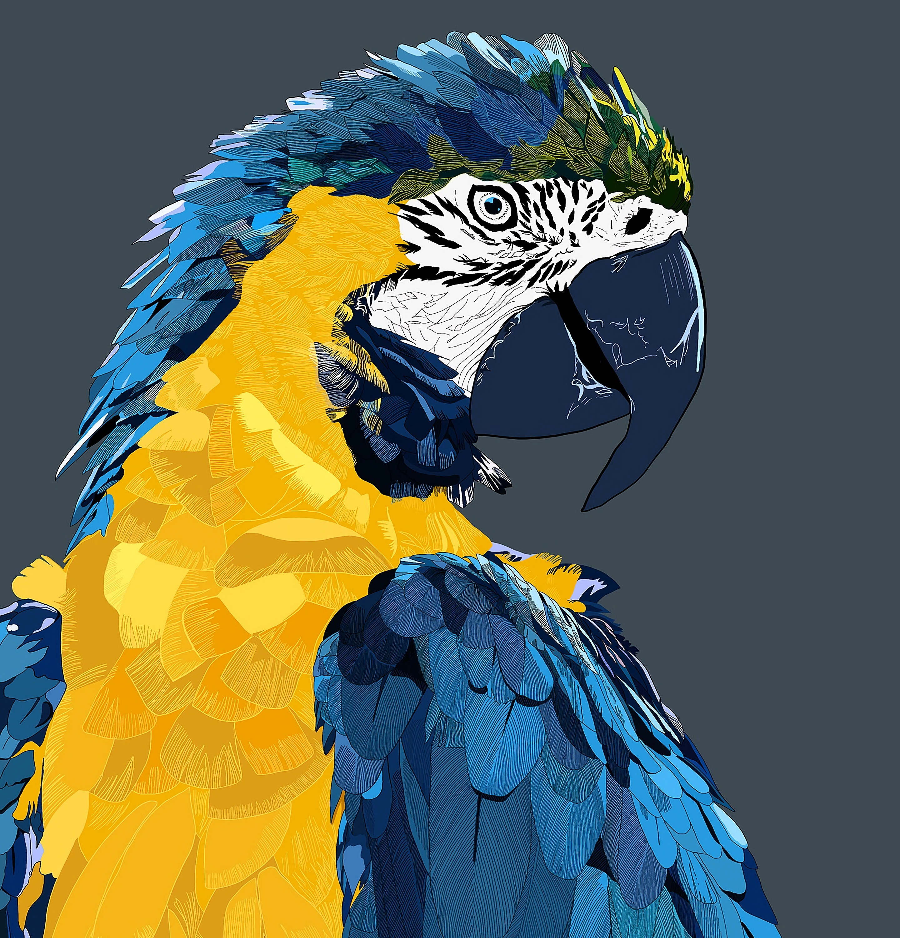 136334 download wallpaper Animals, Parrots, Macaw, Art, Bird screensavers and pictures for free