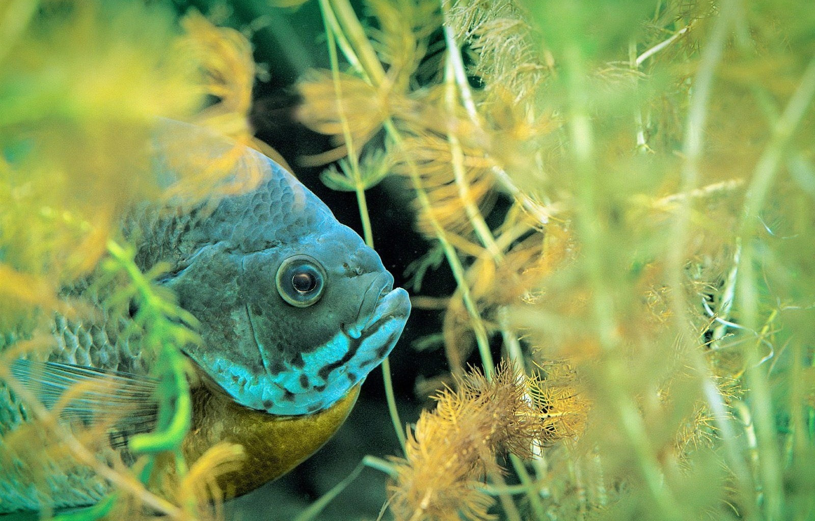 28662 download wallpaper Animals, Aquariums, Fishes screensavers and pictures for free