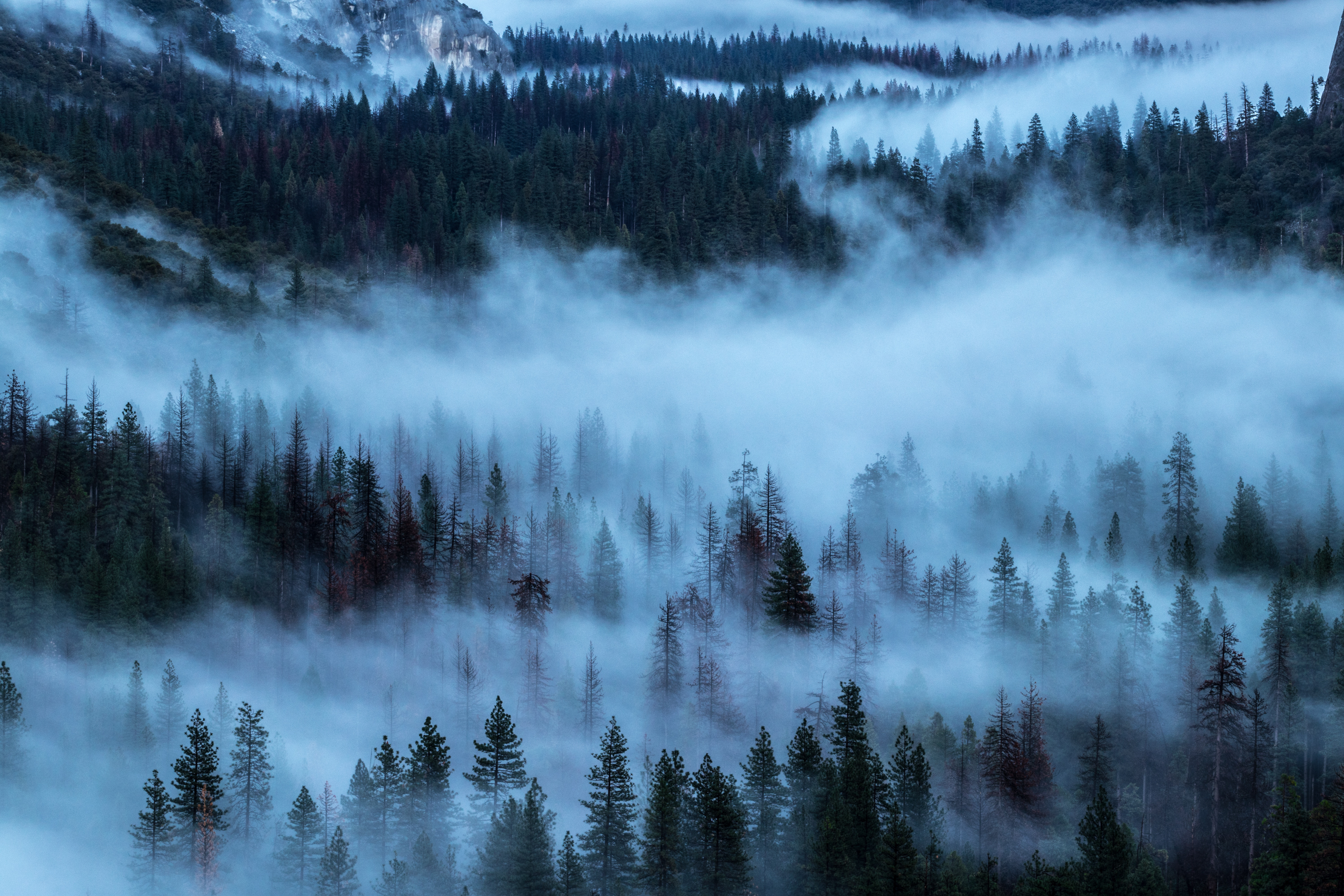 103454 Screensavers and Wallpapers Shroud for phone. Download Nature, Trees, Fog, Shroud pictures for free
