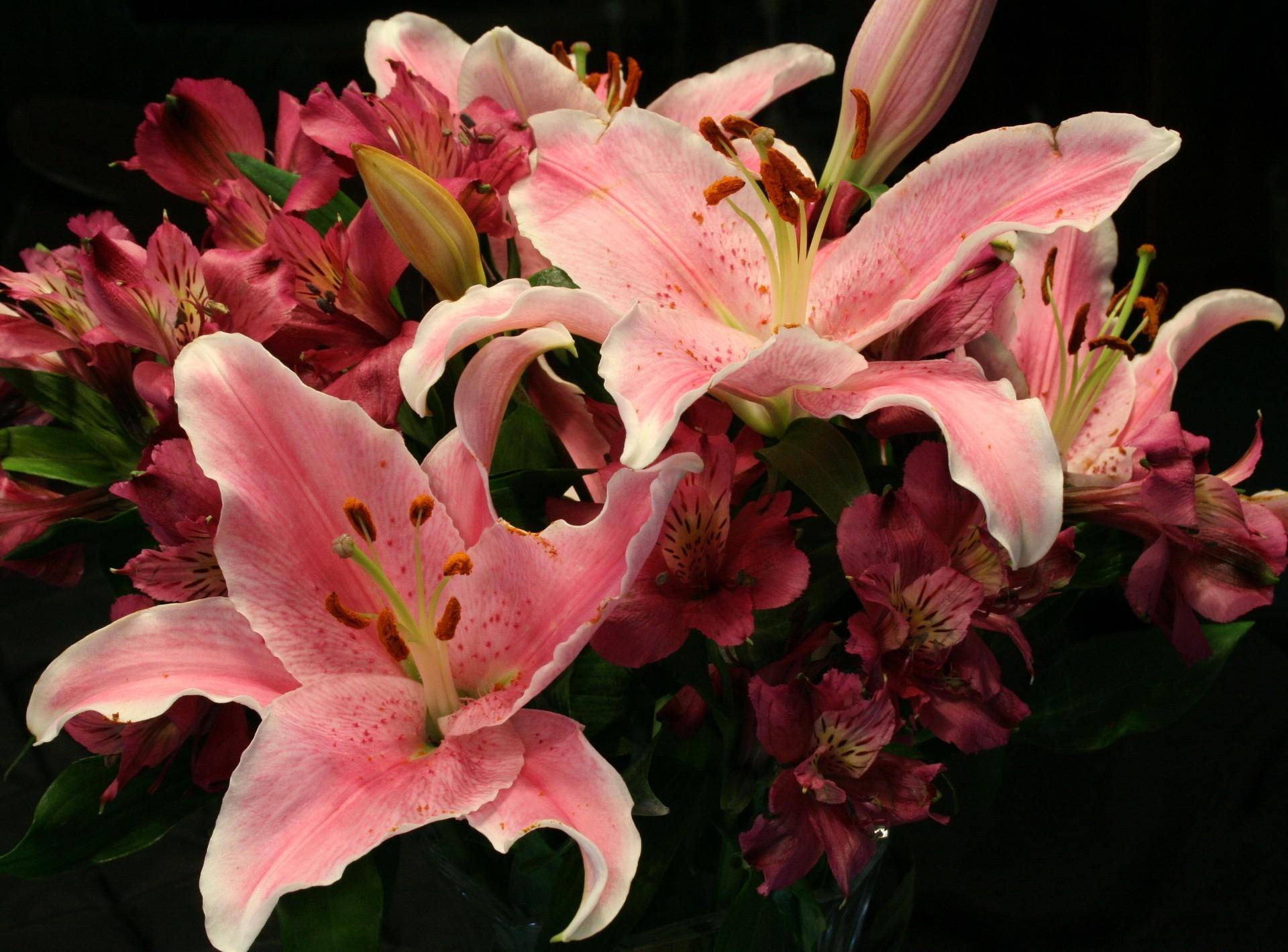 148509 скачать обои Цветы, Лилии, Альстромерия, Букет - заставки и картинки бесплатно